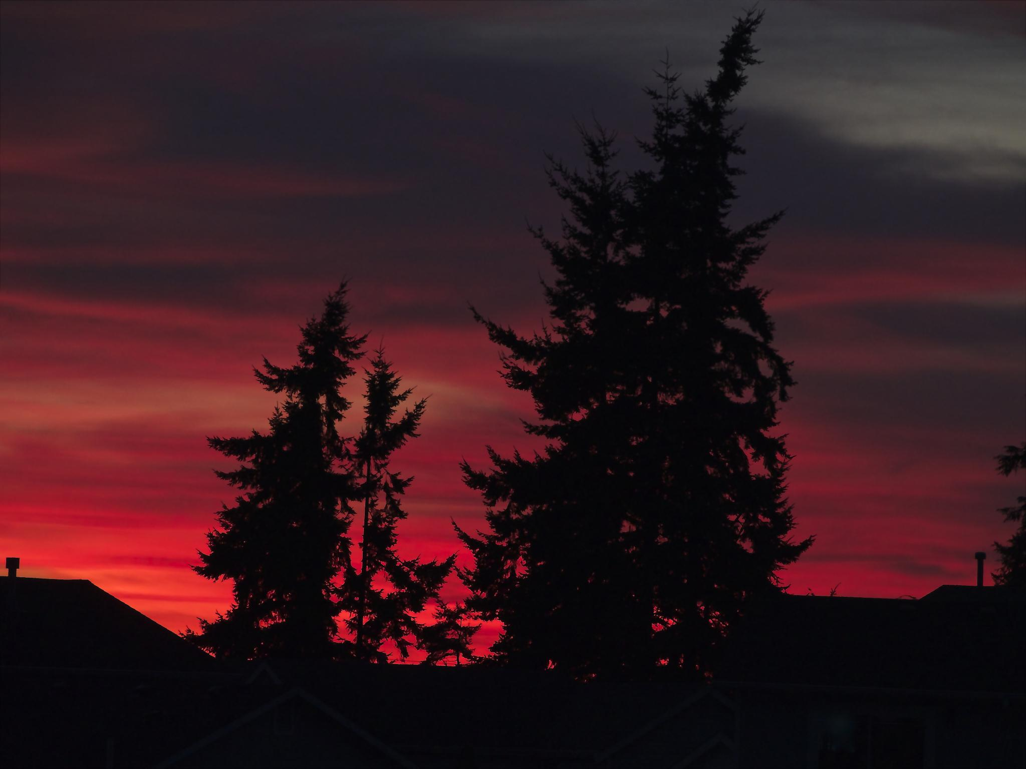 another backyard sunset by MTM