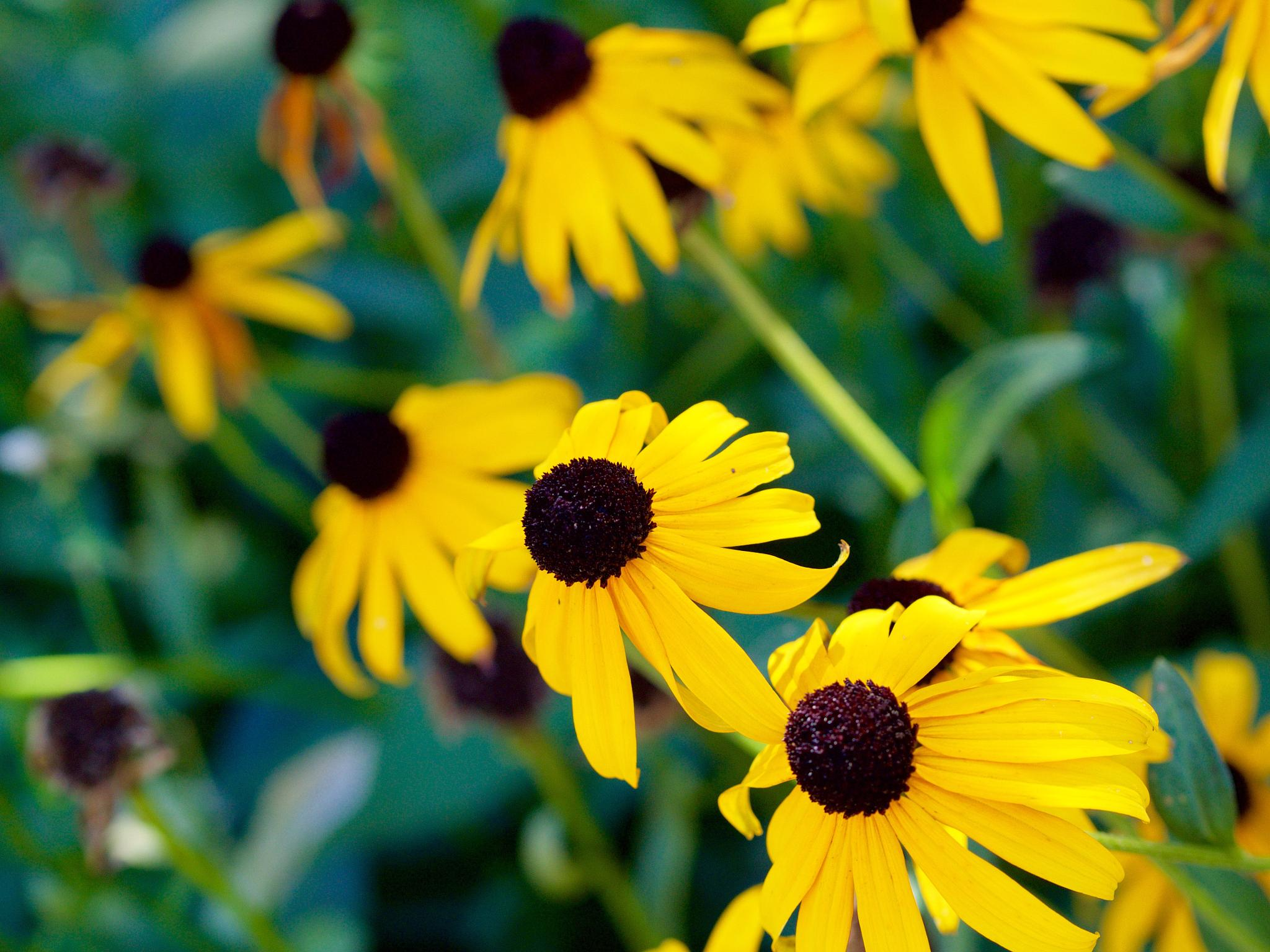 more yellow flowers by MTM