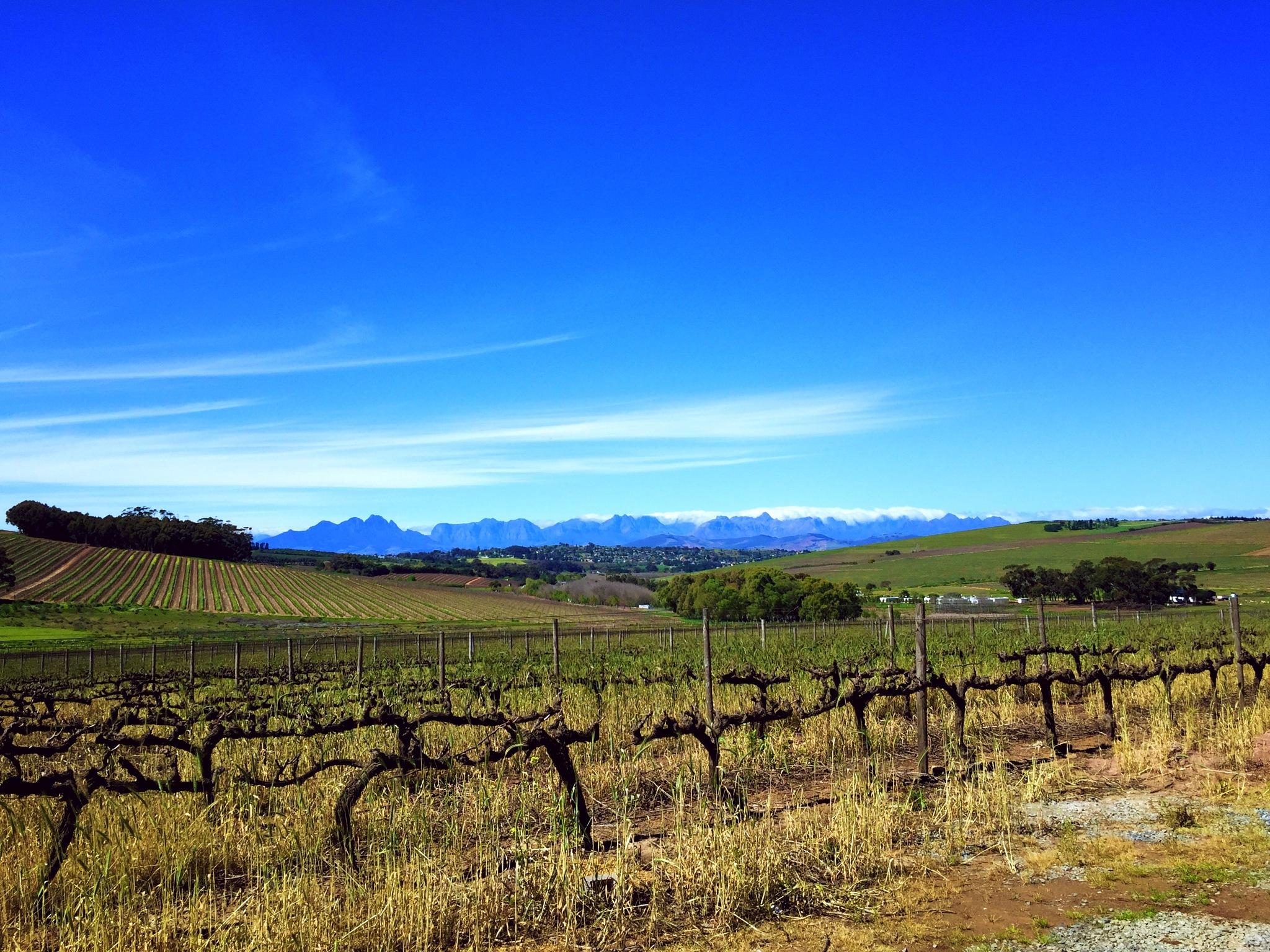 Vineyards  by JB