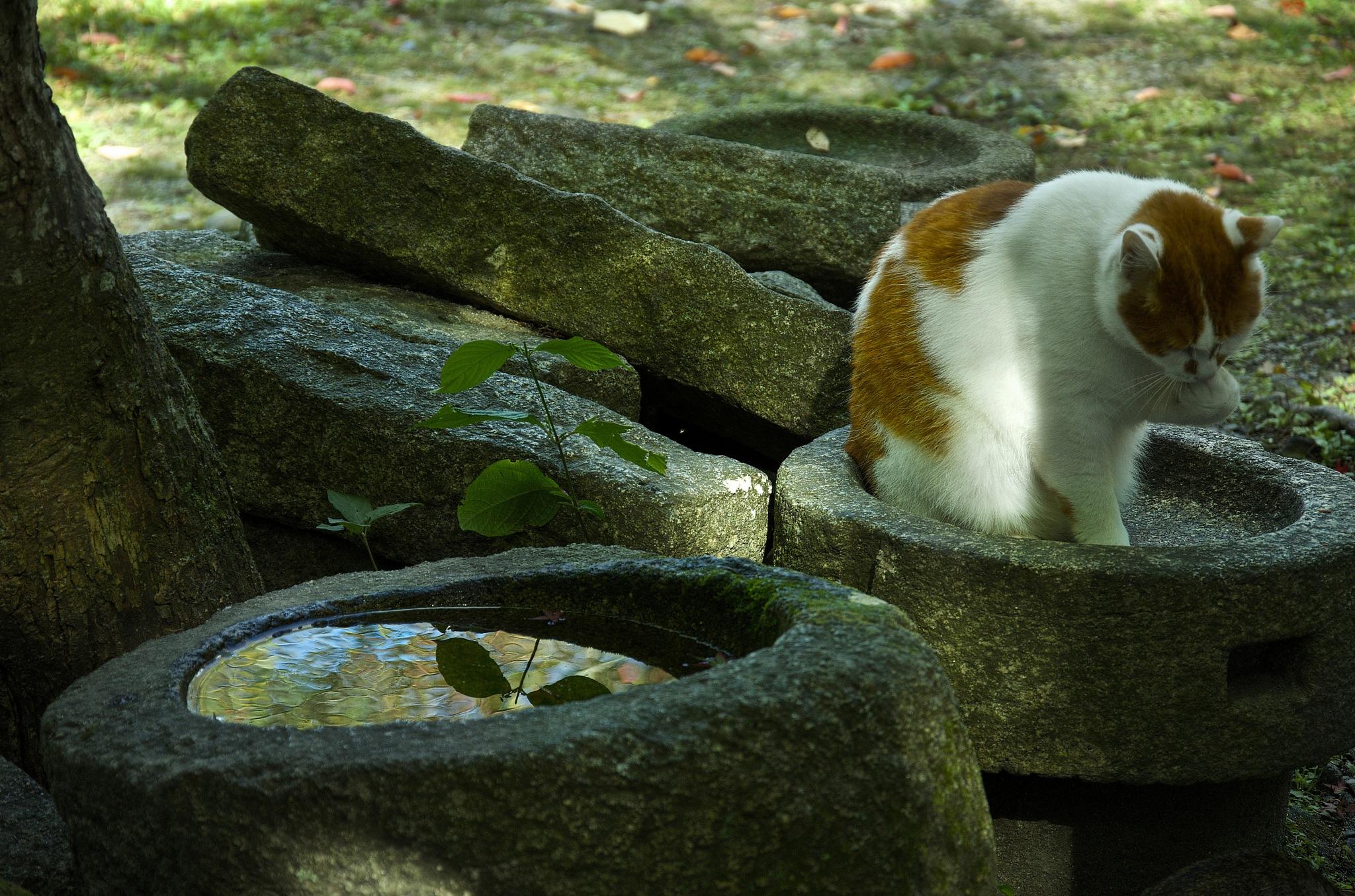 Cat. by Lydie Burgunder