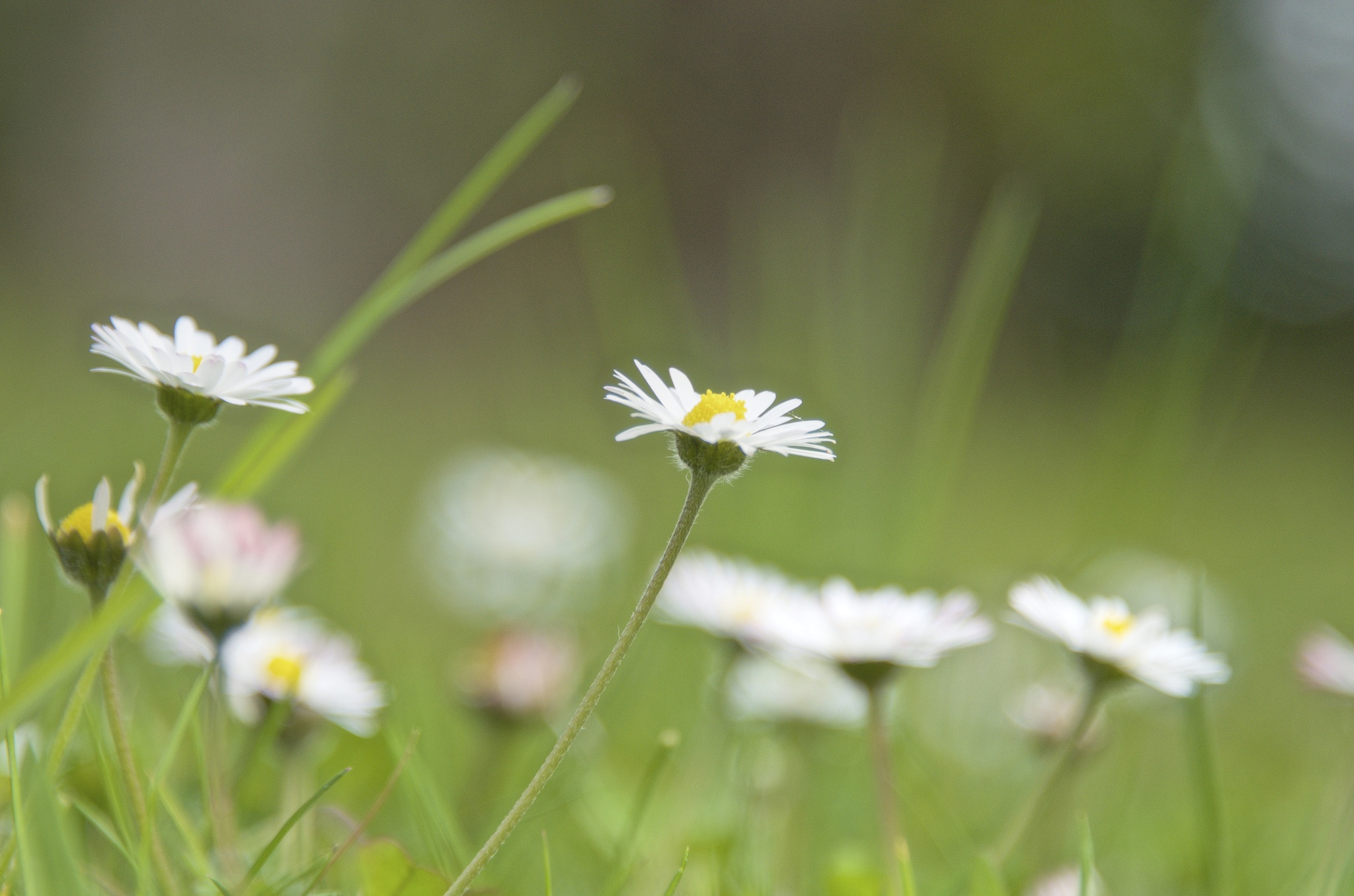 Whoops-a-daisy. by Lydie Burgunder