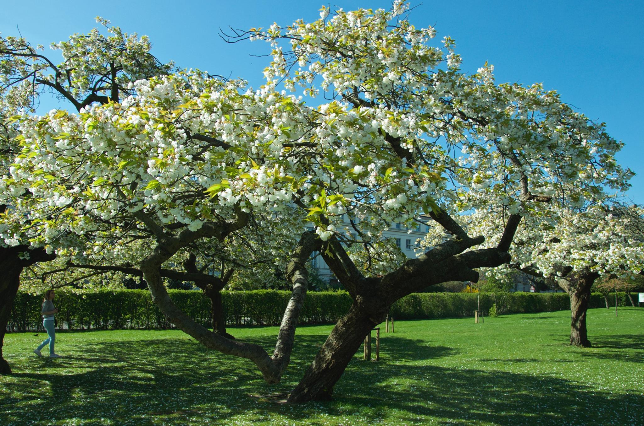 Spectacular London spring by Lydie Burgunder