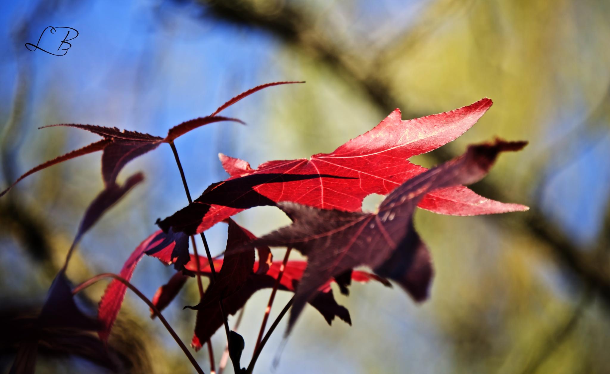 Fall, leaves , fall... by Lydie Burgunder