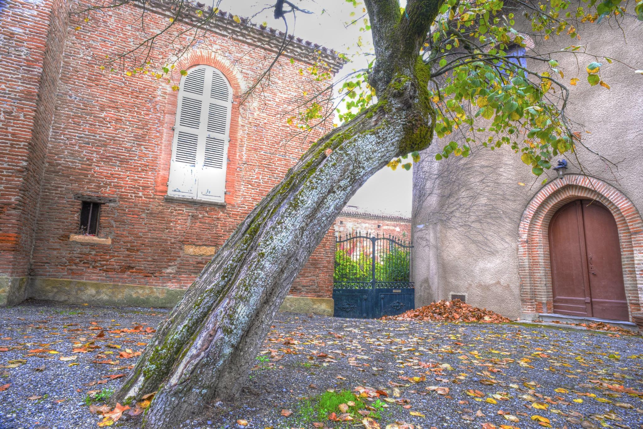 Tree in courtyard. by Lydie Burgunder