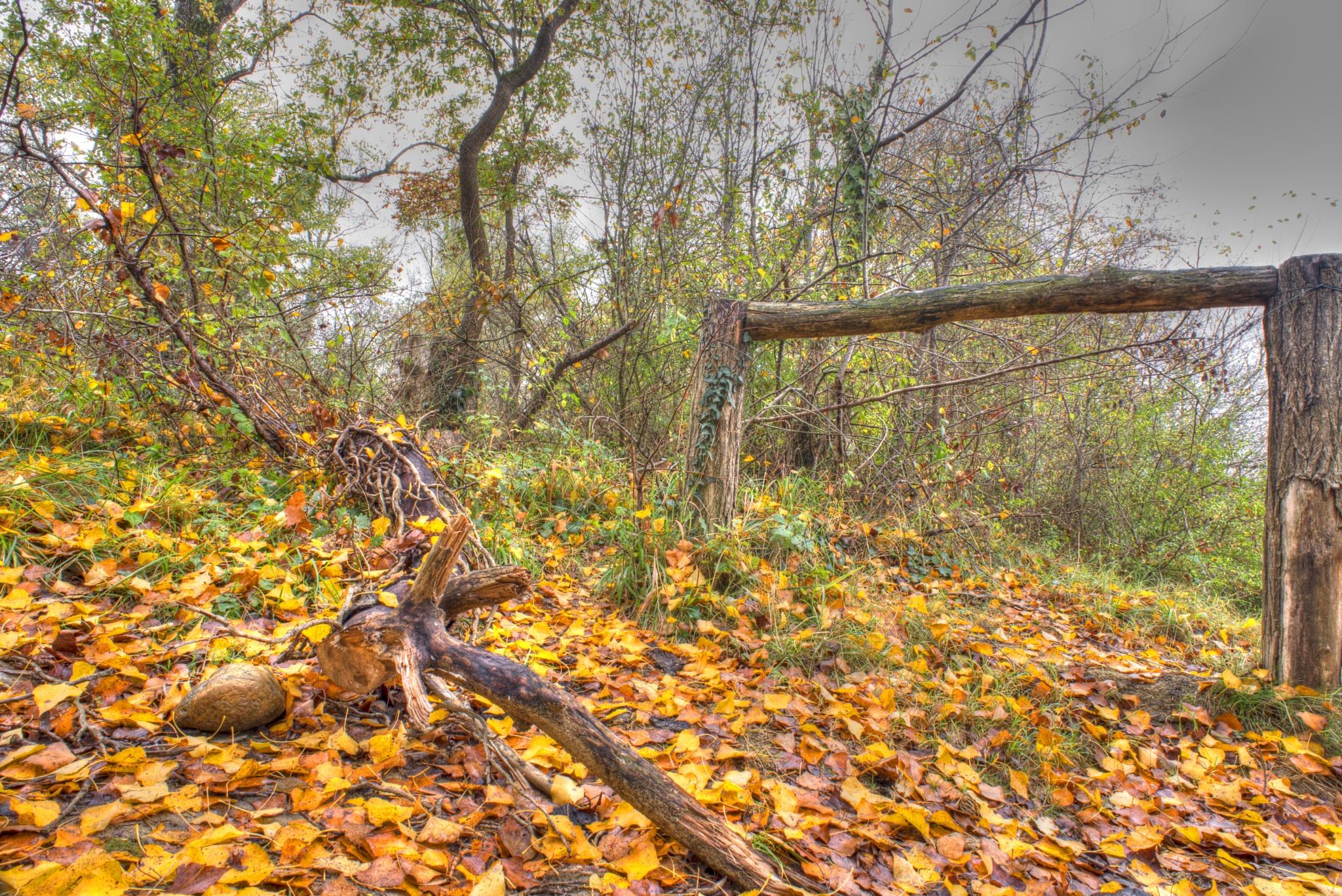 Yellow leaves. by Lydie Burgunder