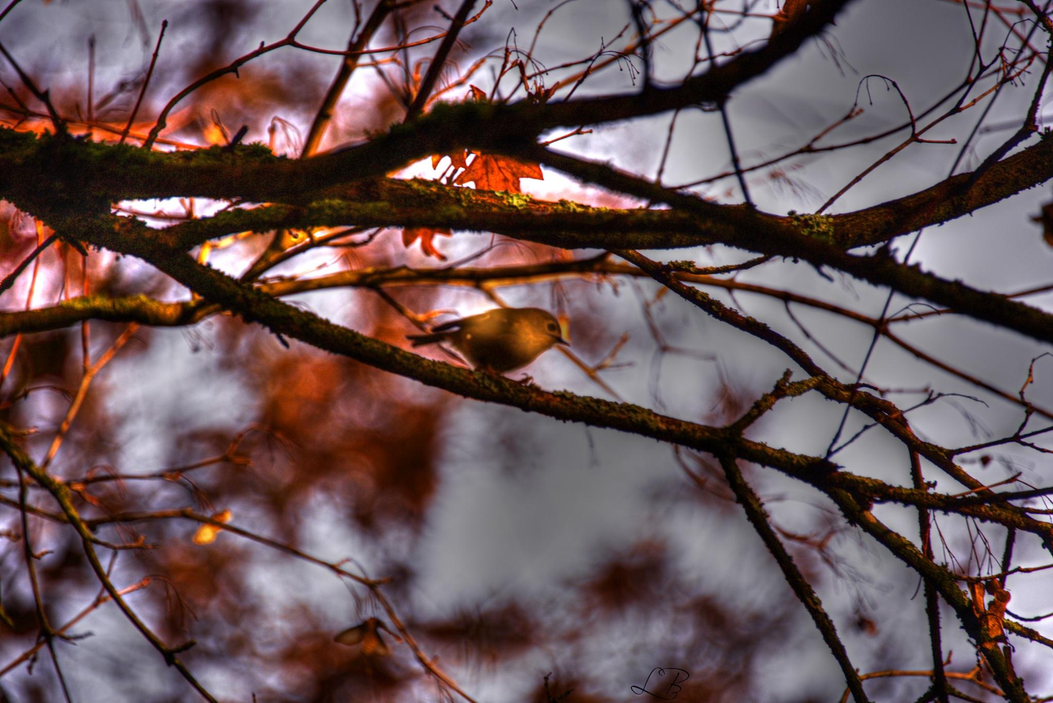 December bird. by Lydie Burgunder