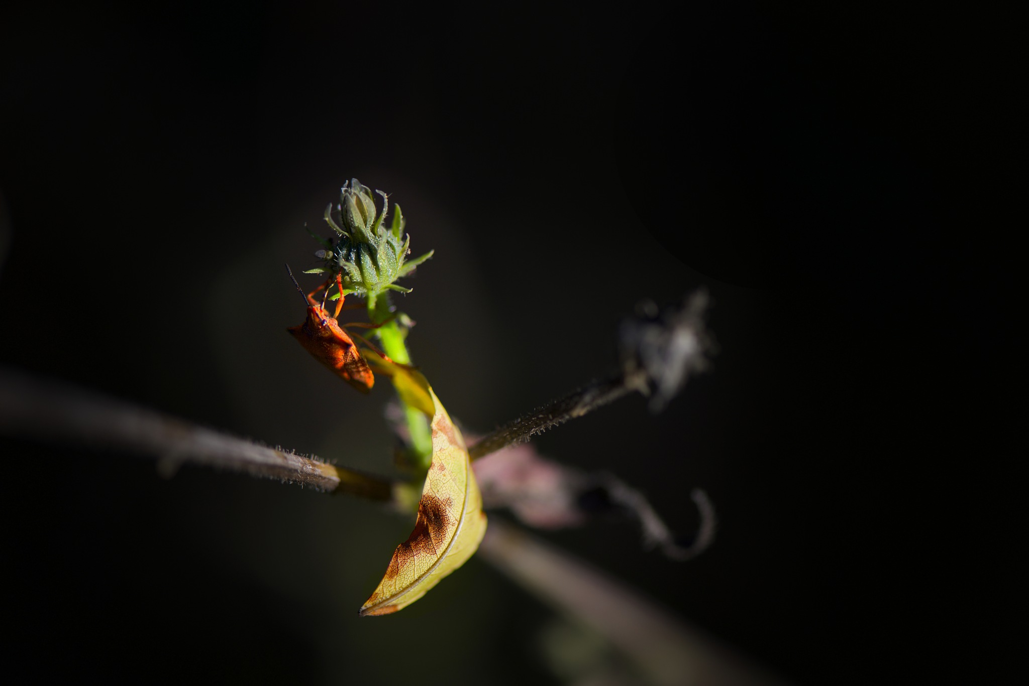 Red bug on green. by Lydie Burgunder