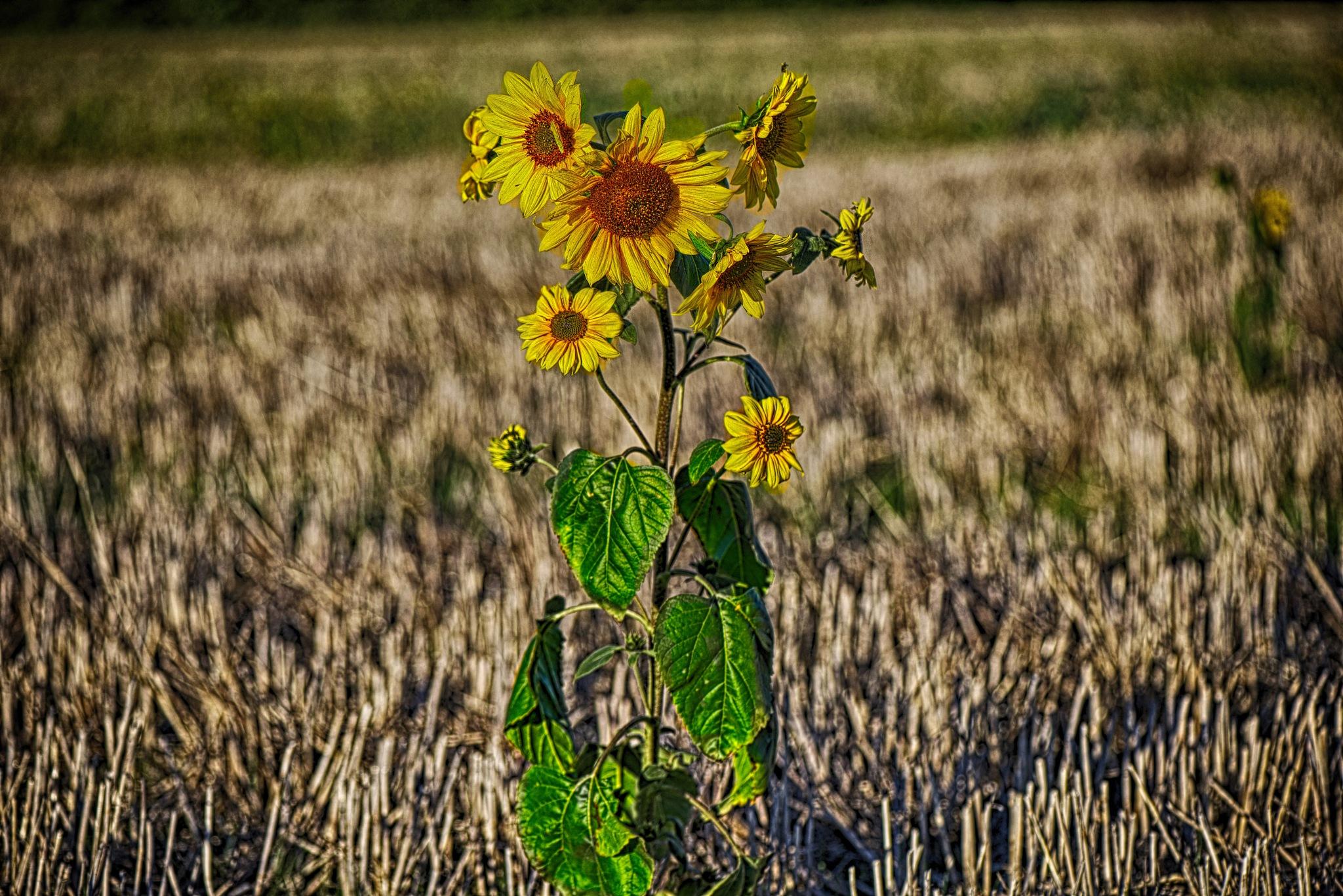 Summer remainder. by Lydie Burgunder