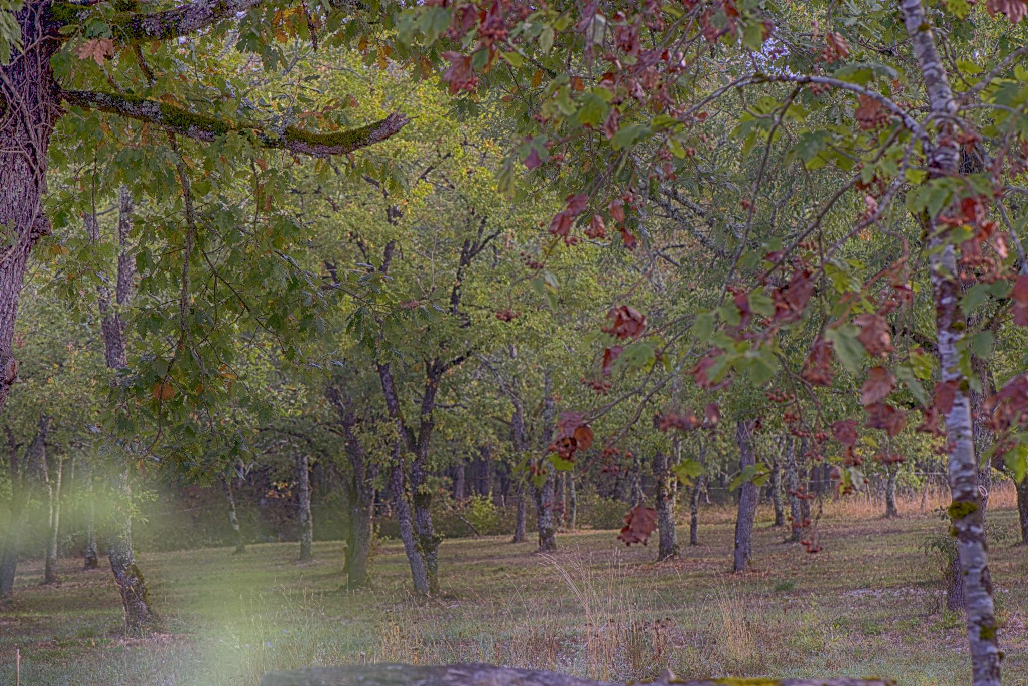 Autumn scene. by Lydie Burgunder