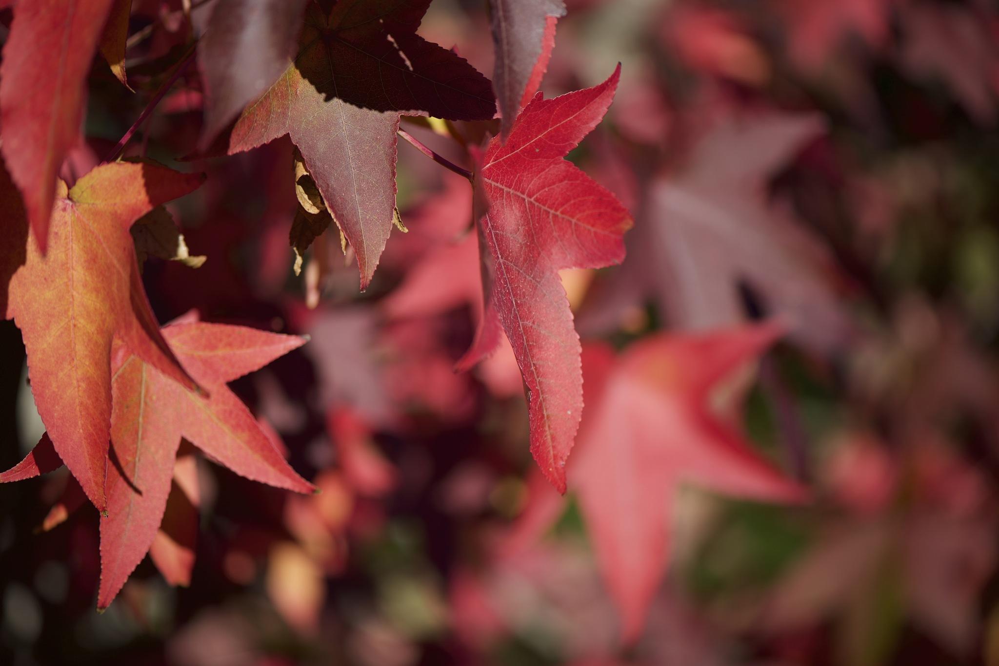 Seeing red. by Lydie Burgunder