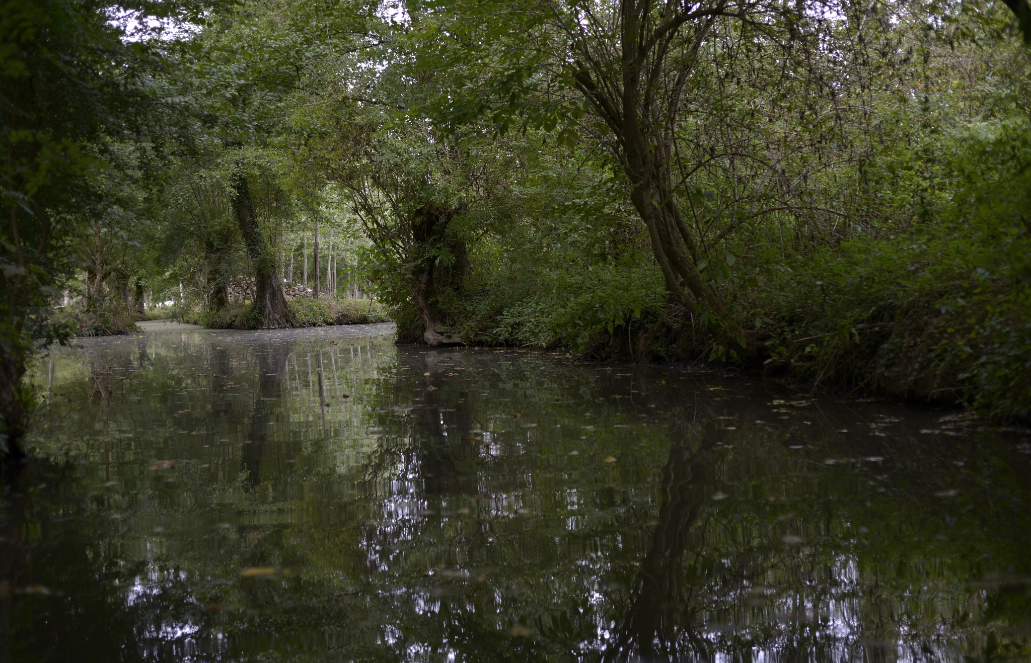 Please join me through the Marais Poitevin #1 by Lydie Burgunder
