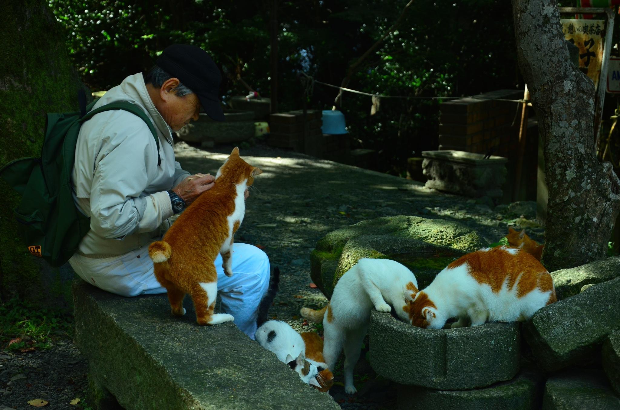 Feeding cats. by Lydie Burgunder