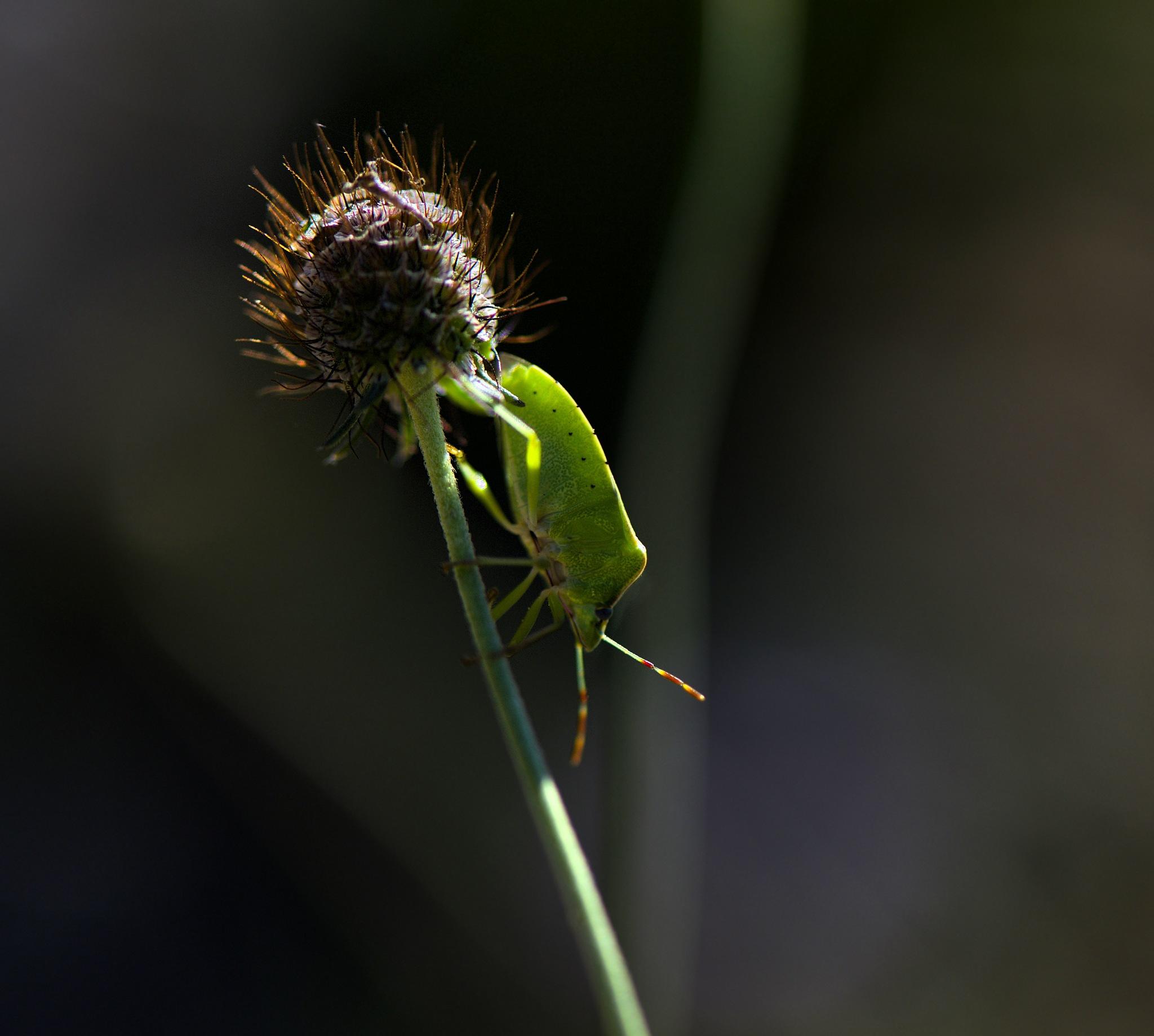 Spiky. by Lydie Burgunder