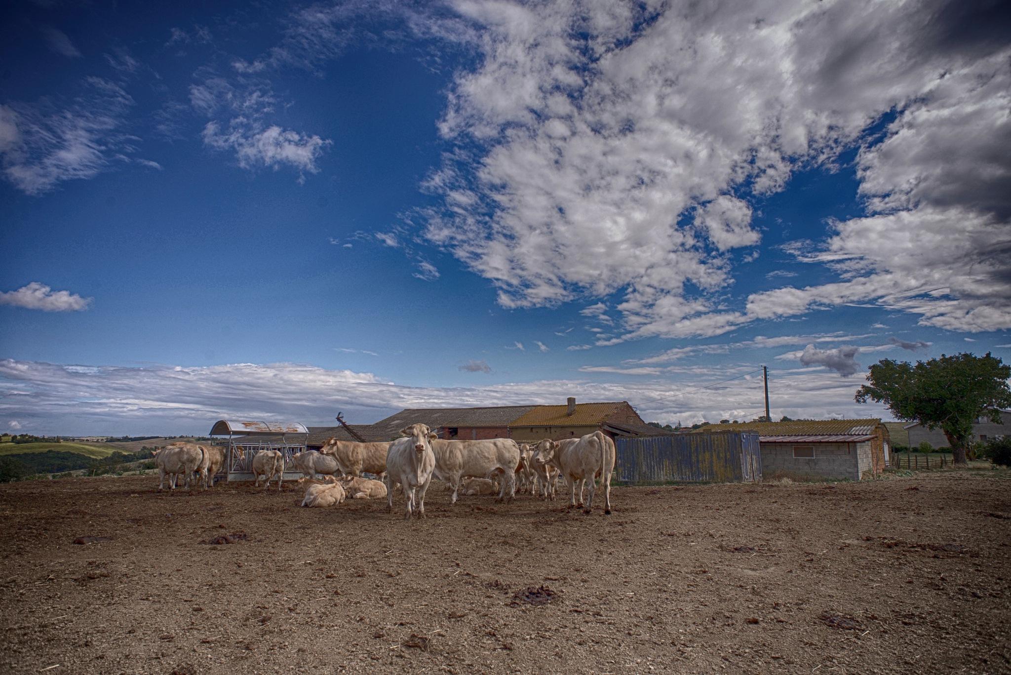 On a farm . by Lydie Burgunder