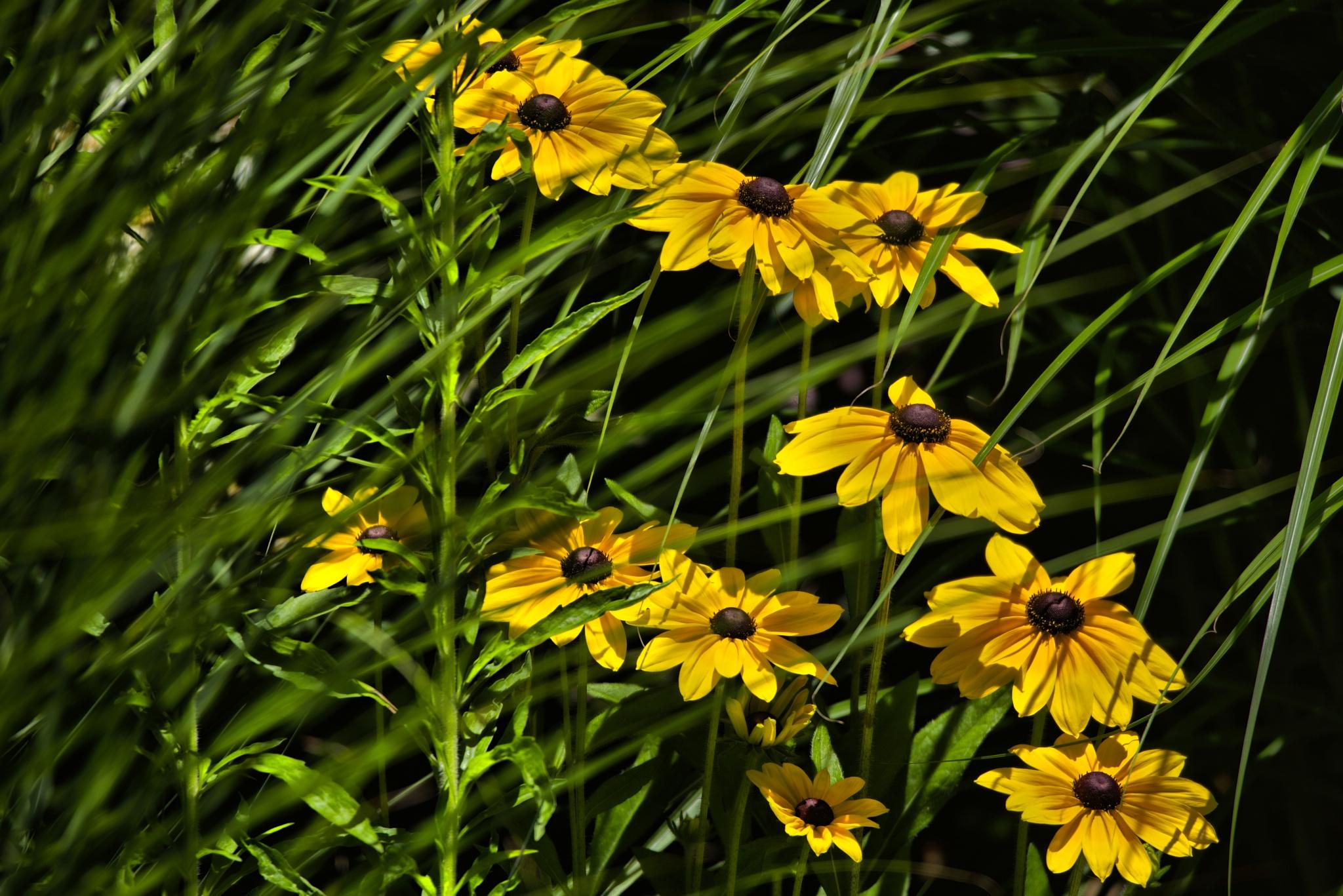 Yellow sunshine. by Lydie Burgunder