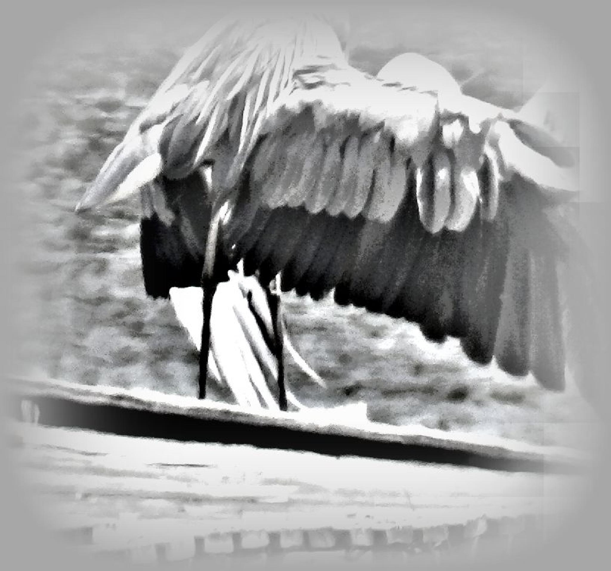 Heron giving me his back side..  by Teri