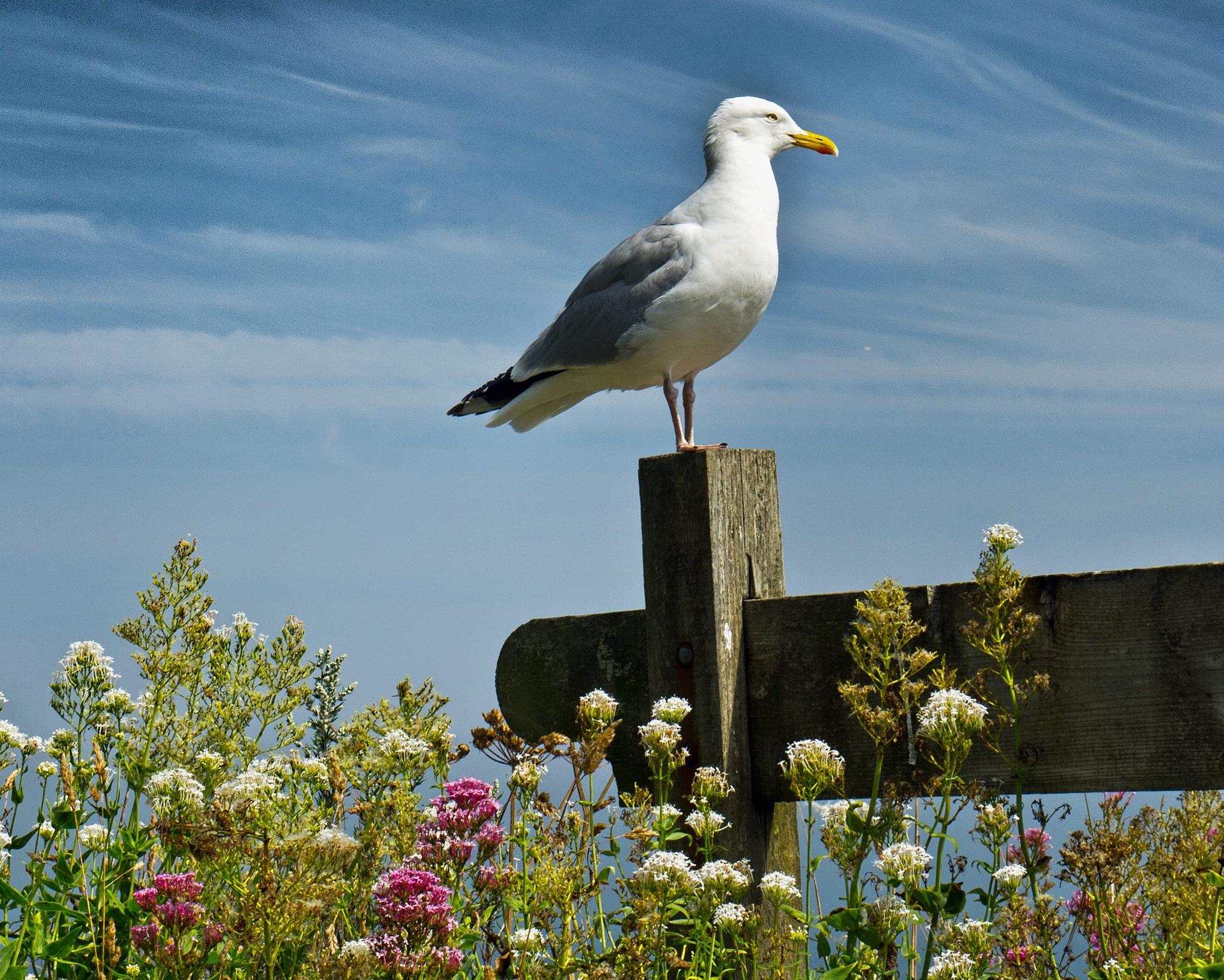 Birds eye view  by Crewman