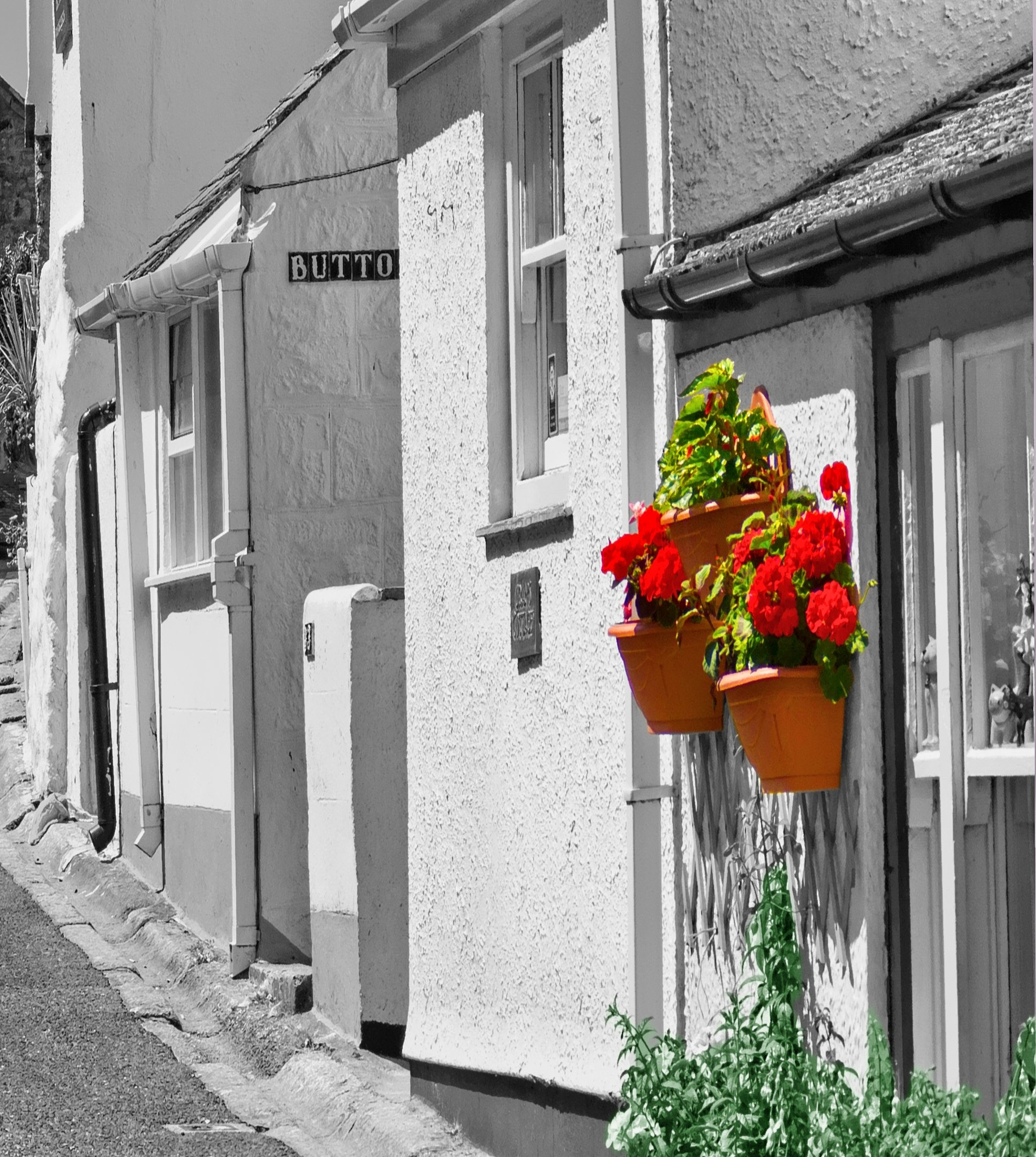 Wall flowers by Crewman