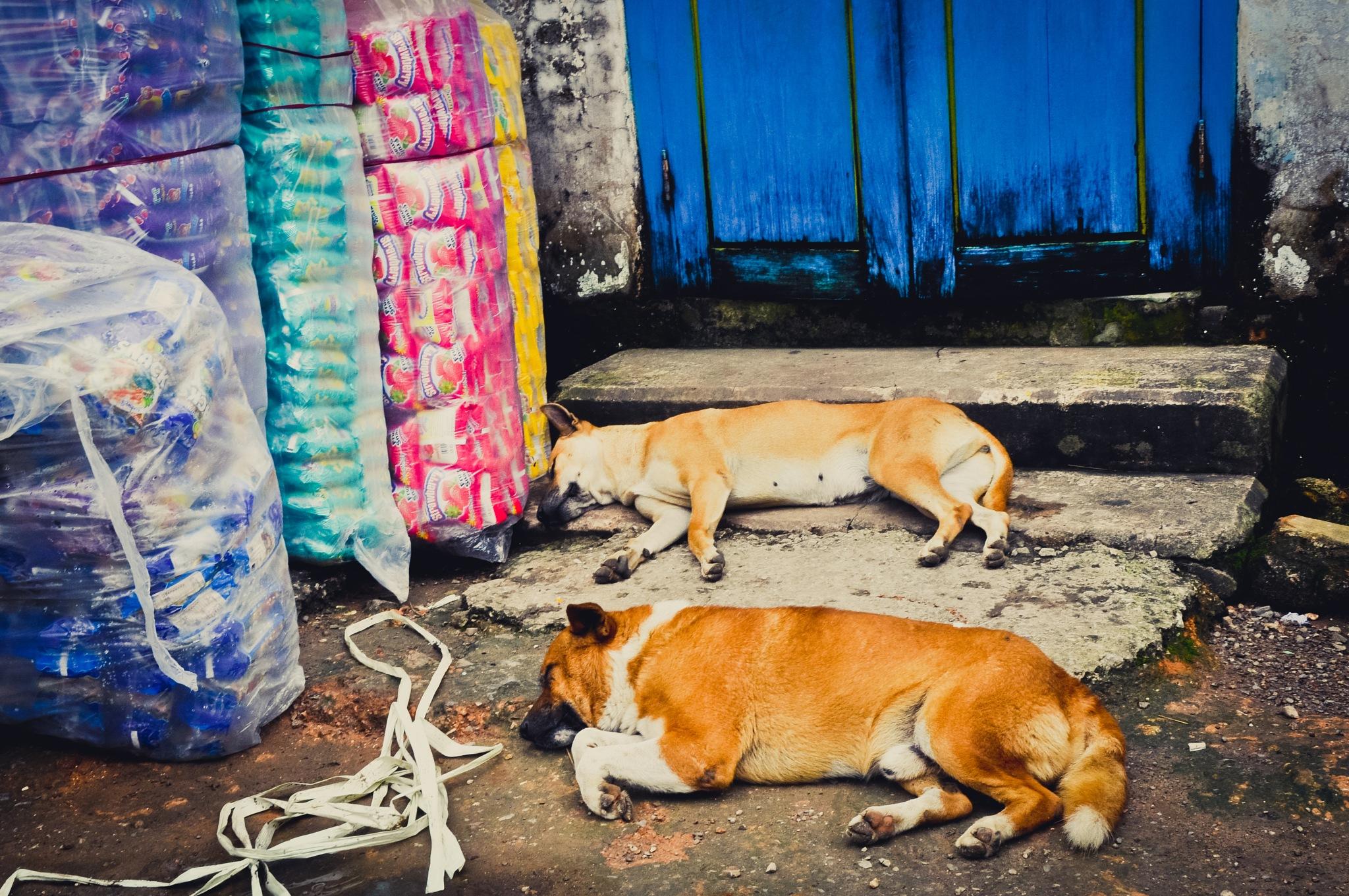 Furry Friends (Myanmar) by Jiri Bielicky