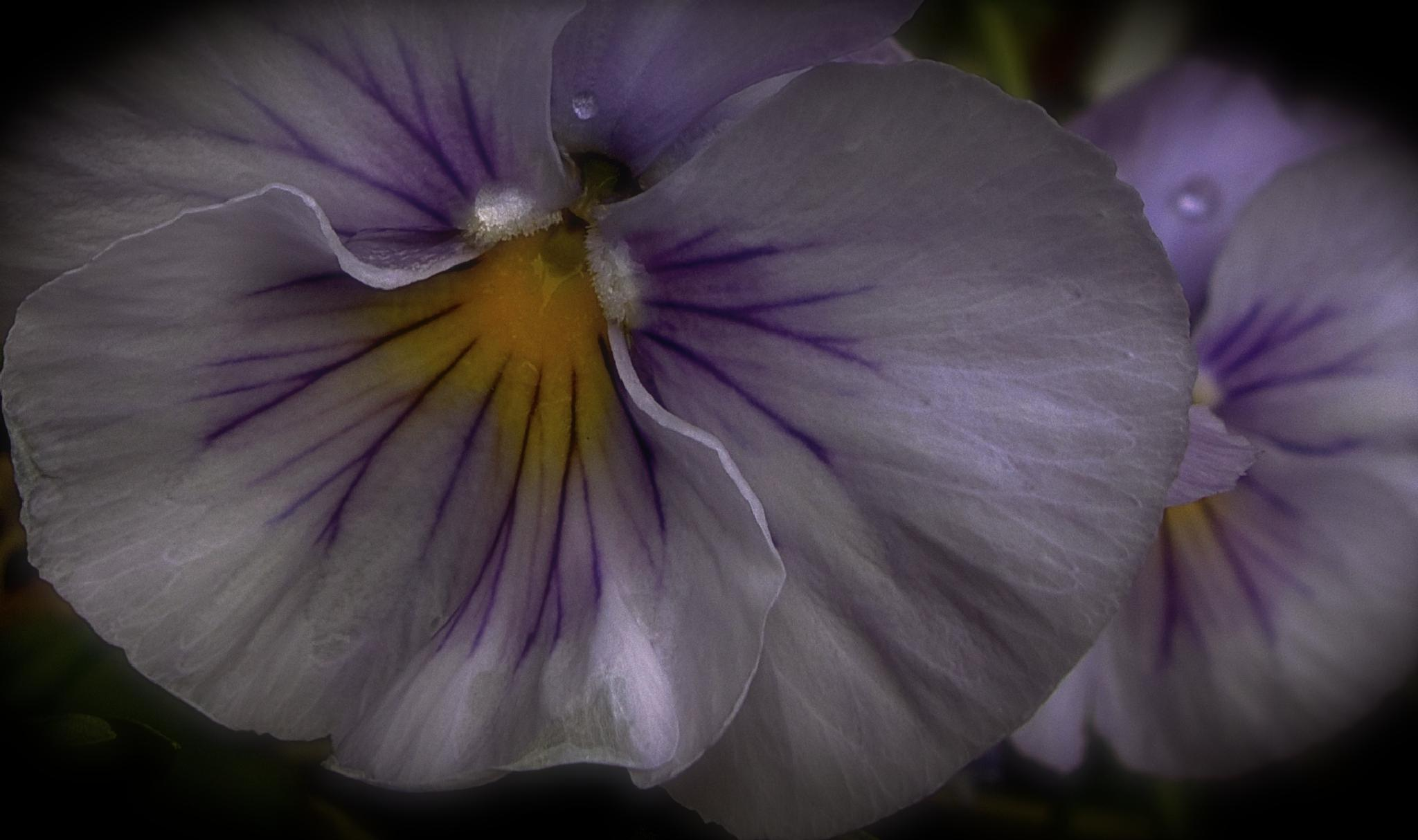Flowers and drops. by Henning N Gaare