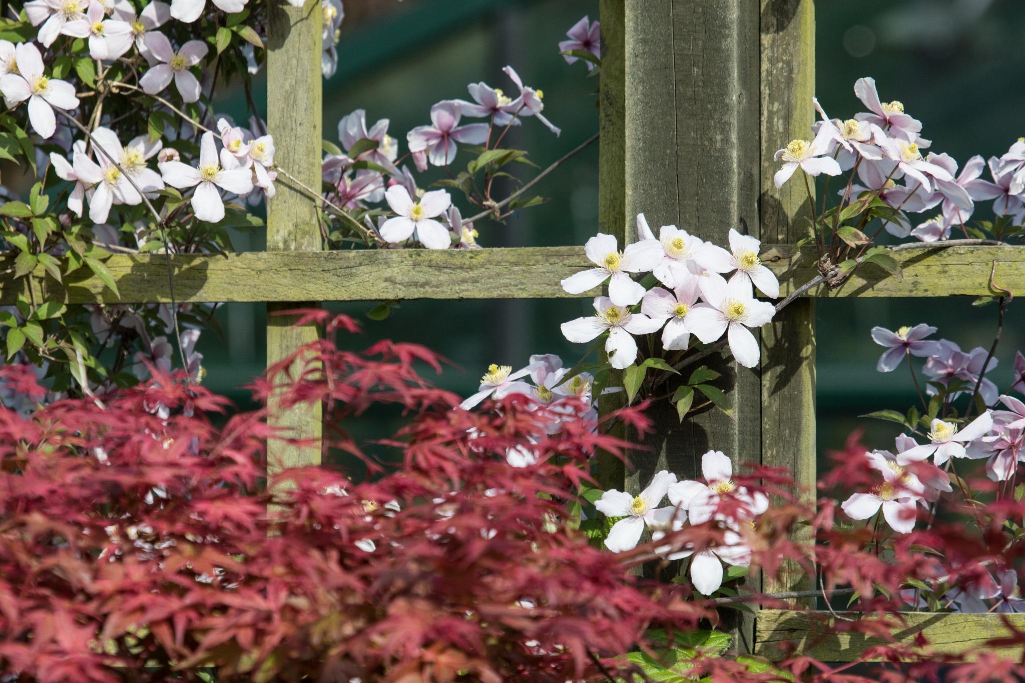 flowered trellis by derek foster