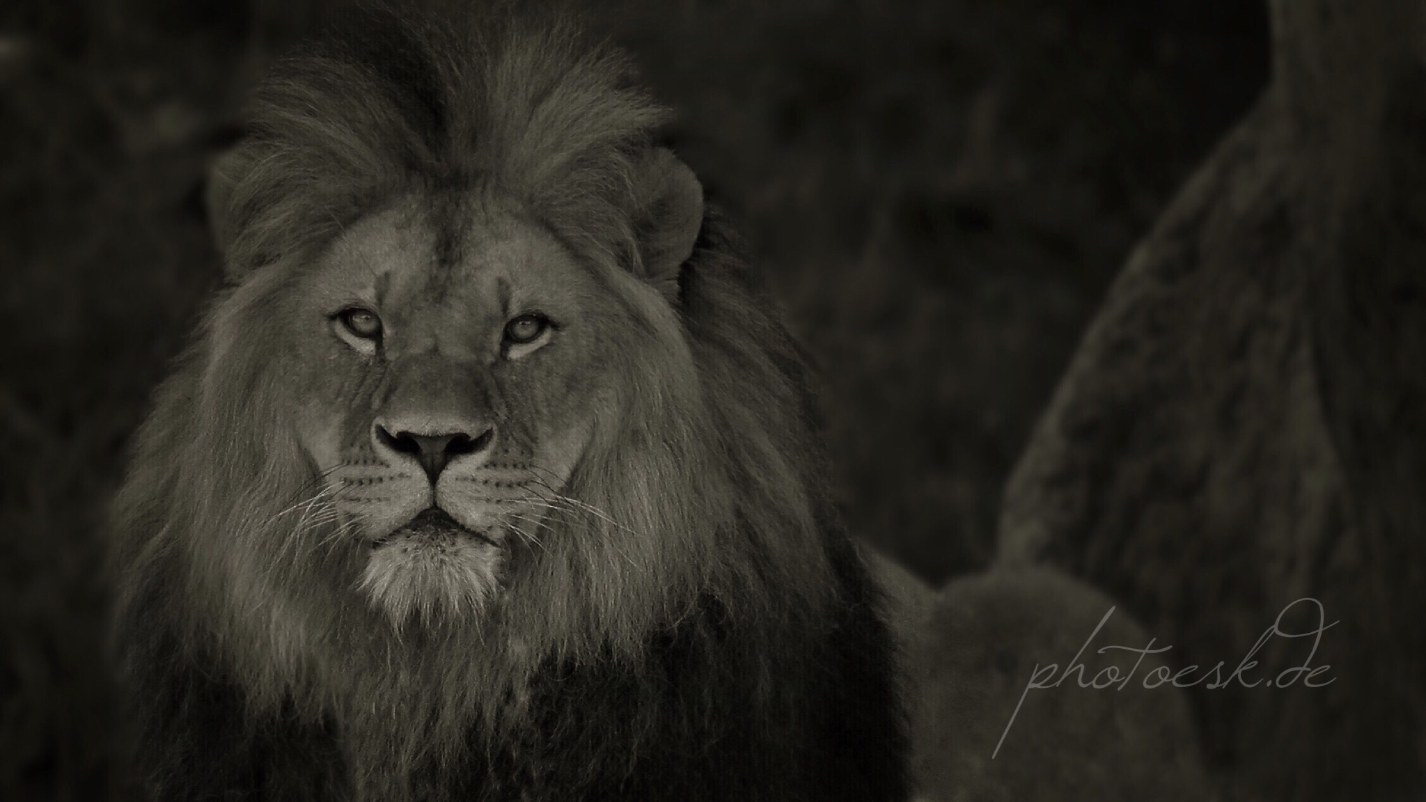 royal expression by photoesk - just Art