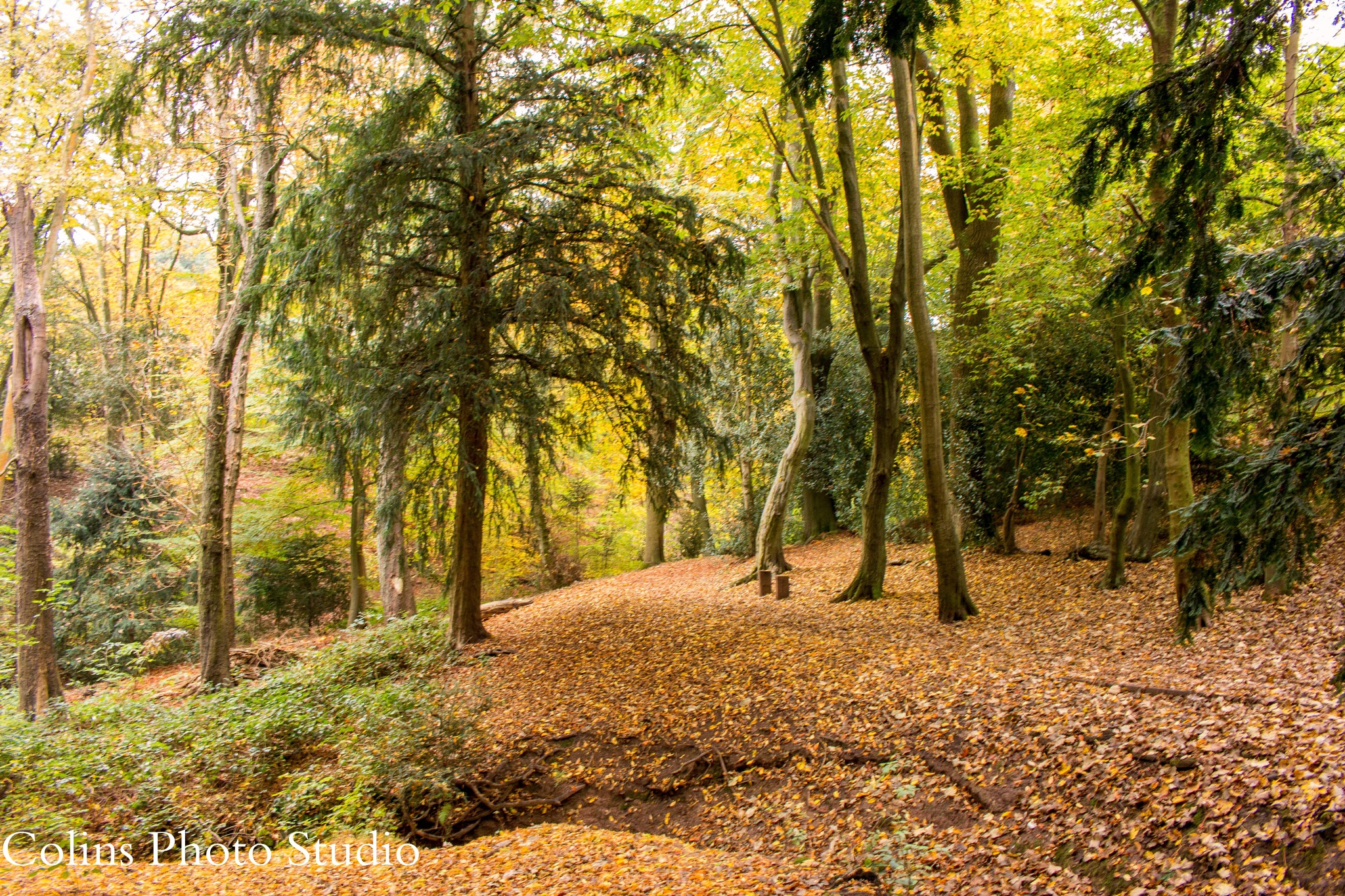 Fall in the woods by Colin