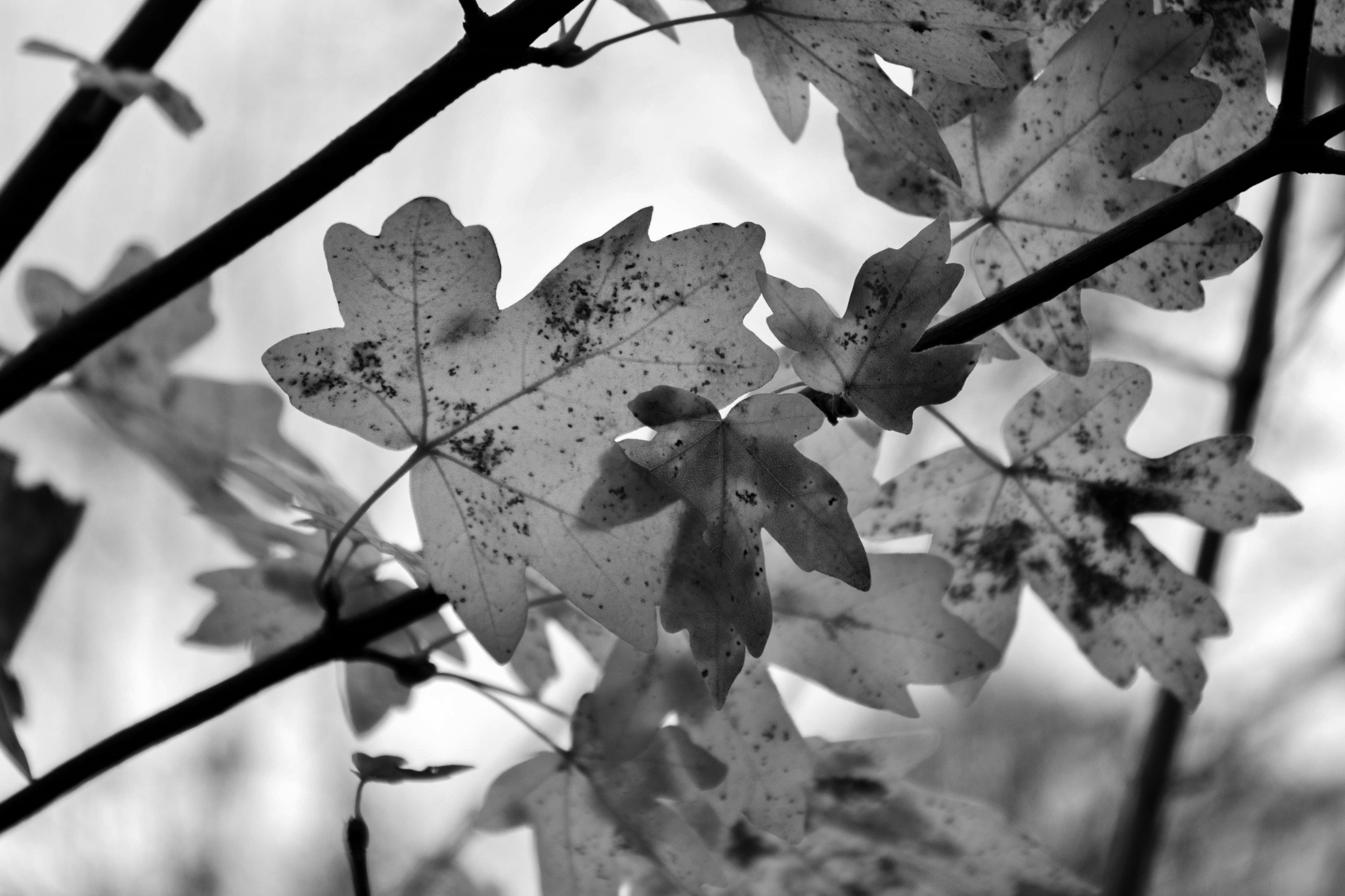 Winter leafs  by Colin