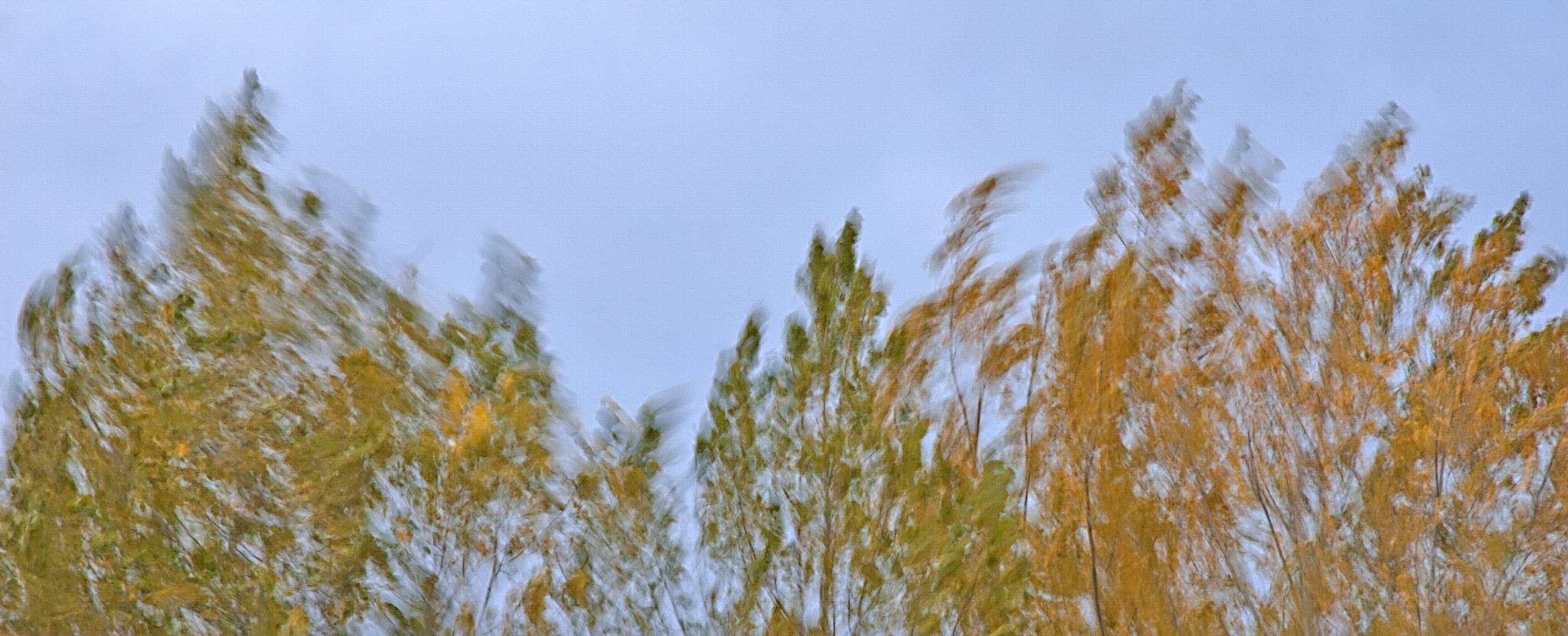 Wind in the Trees by Steve Ohlsen