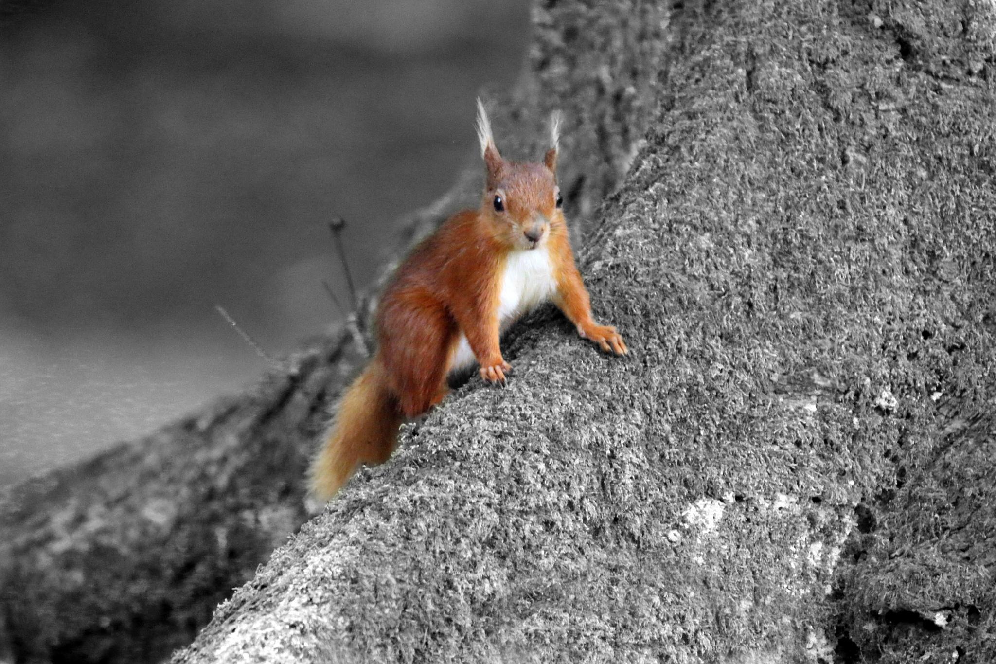 Photo in Animal #squirrel #red #colourpop