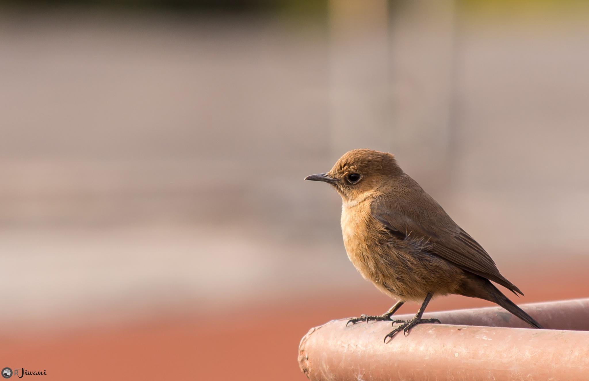 Lonely Bird by Rahim Jiwani
