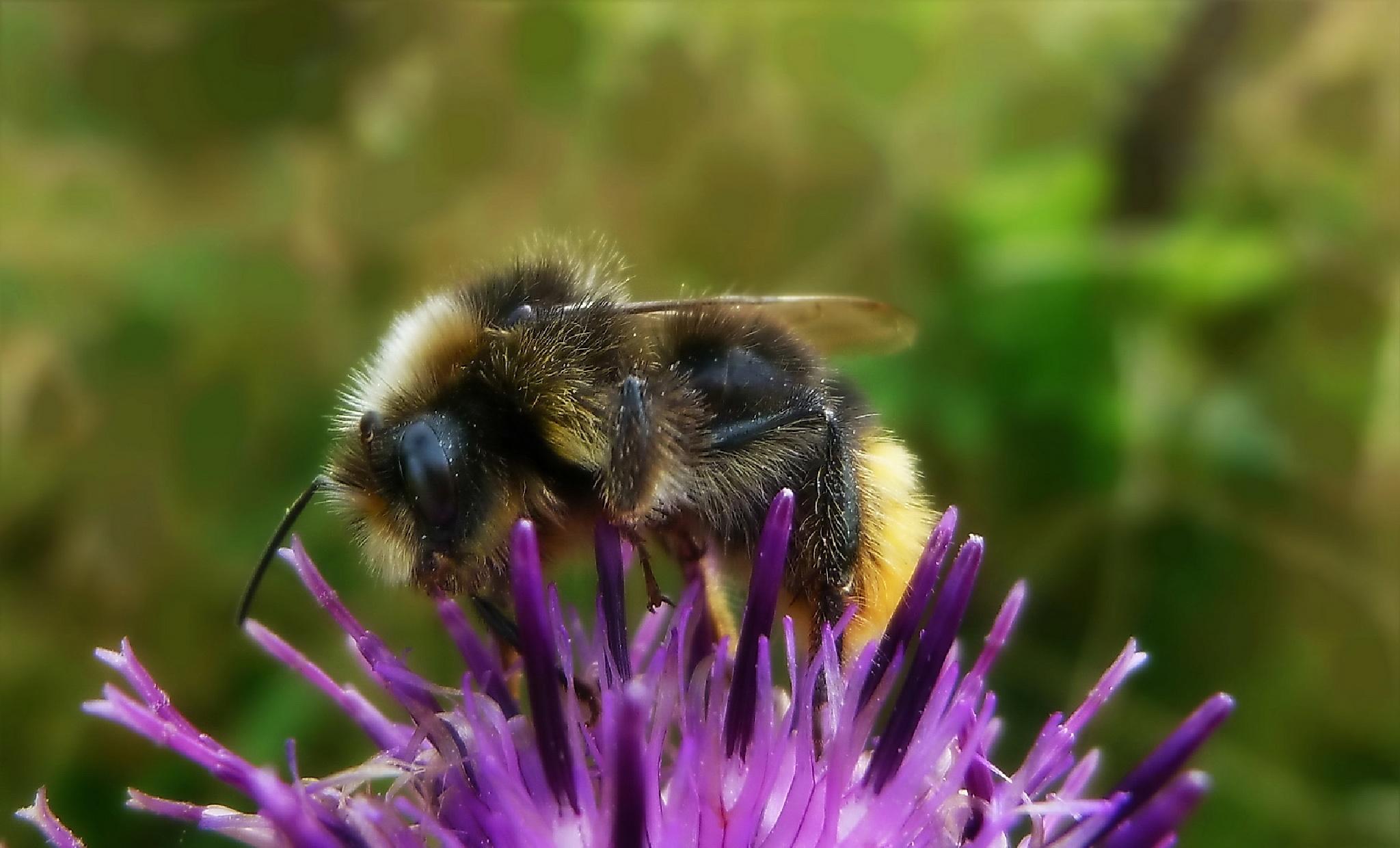 Busy bee by MonikaH