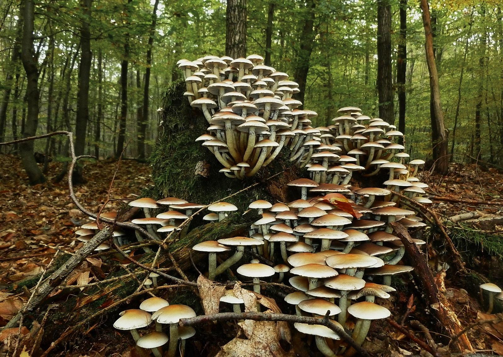 Mushroom tower by MonikaH