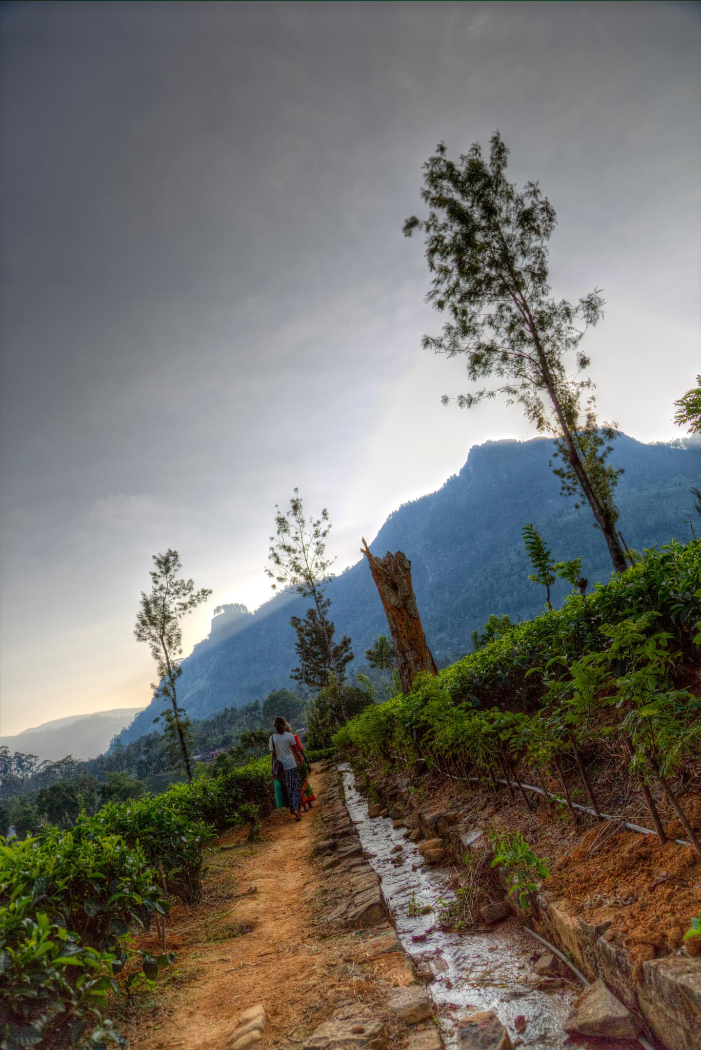 Sri Lanka by Sylvain LANDRY