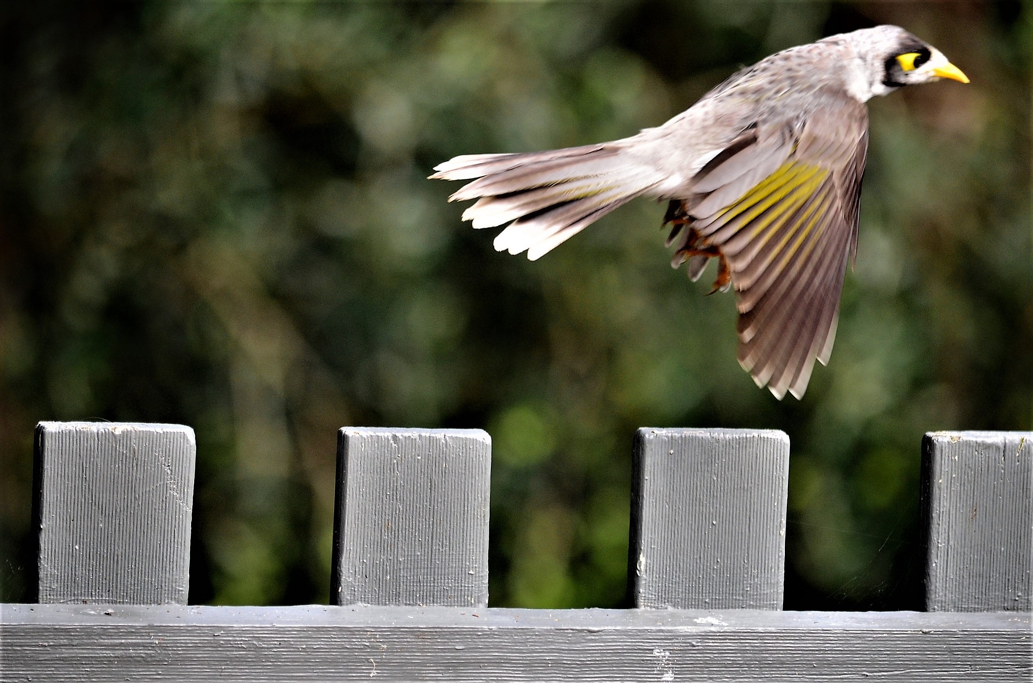 Flight by arraguado
