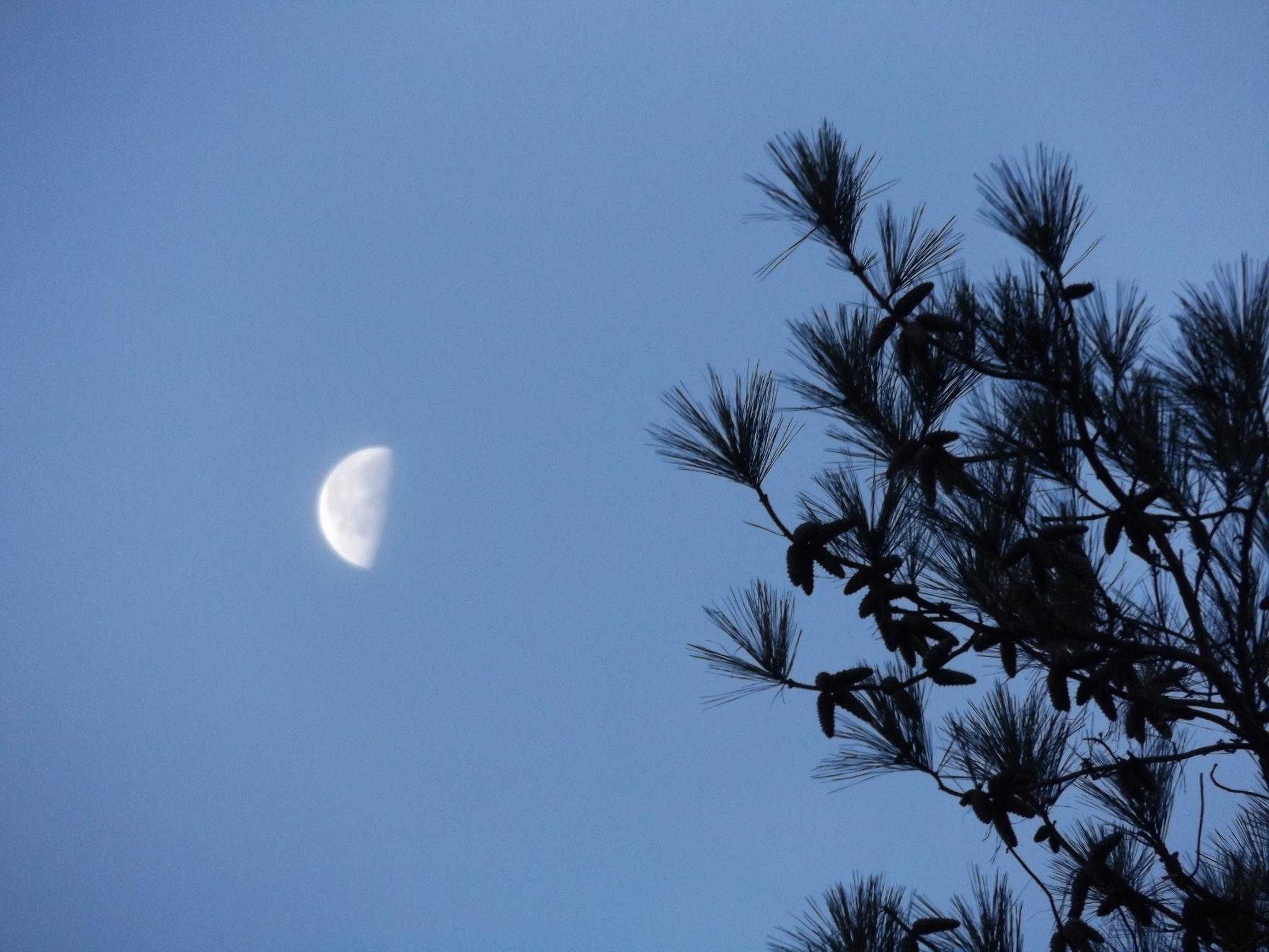 MORNING MOON by ritamcbai66
