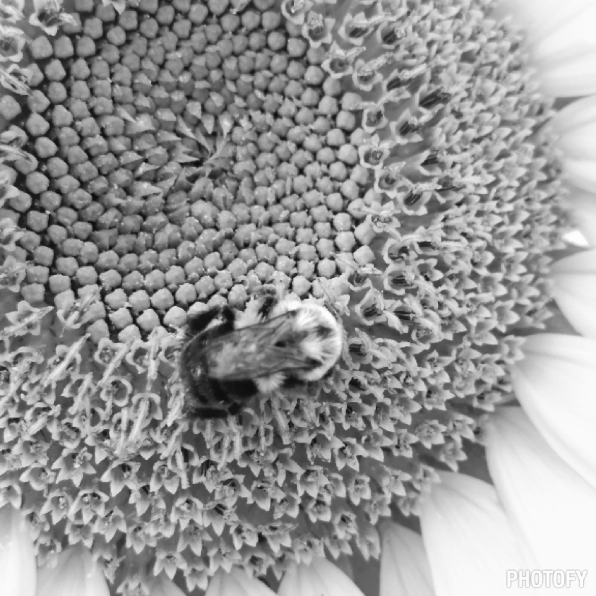 Beeflower  by vampirecy