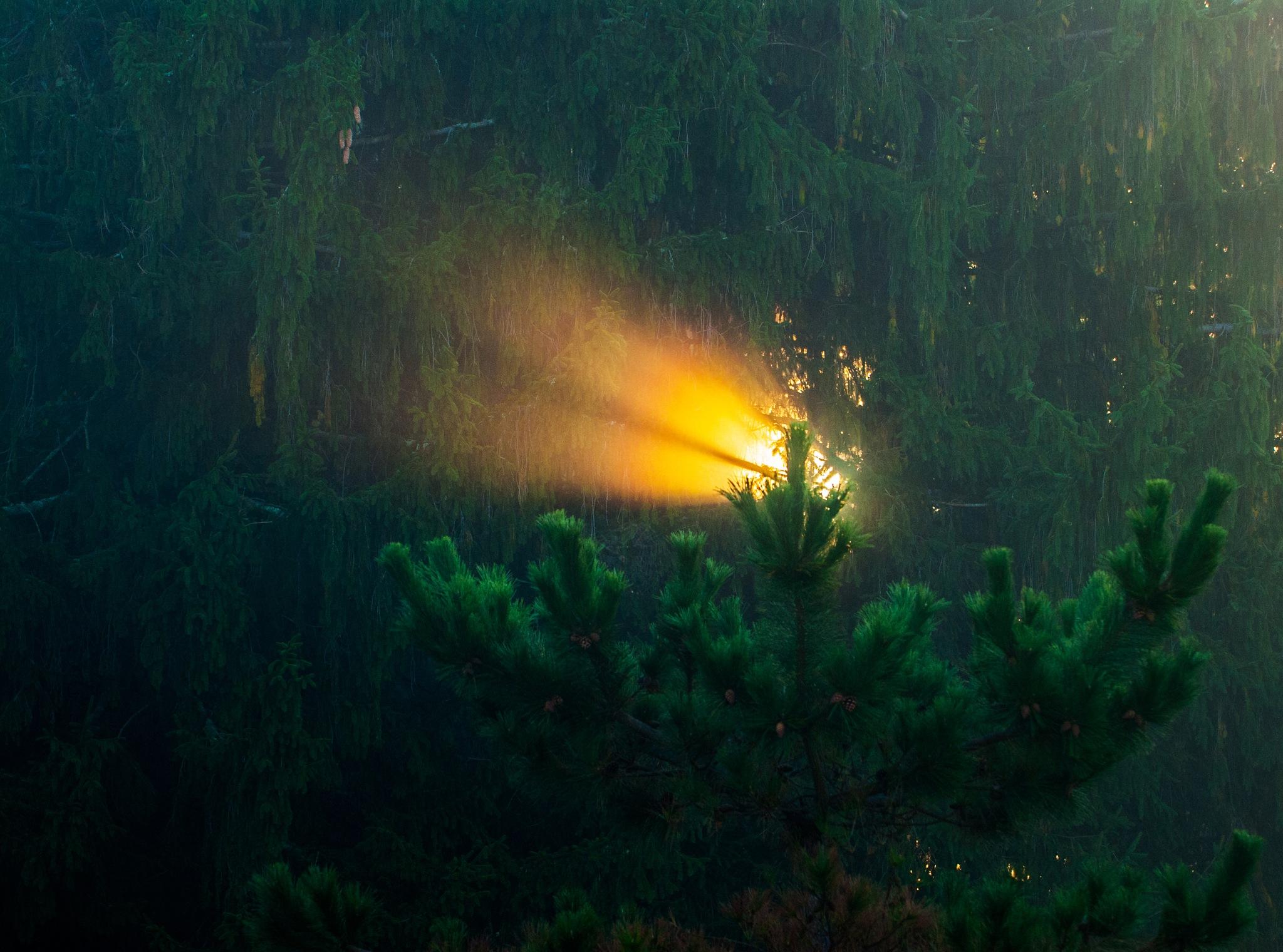 Sunrise by Dealsnphotos