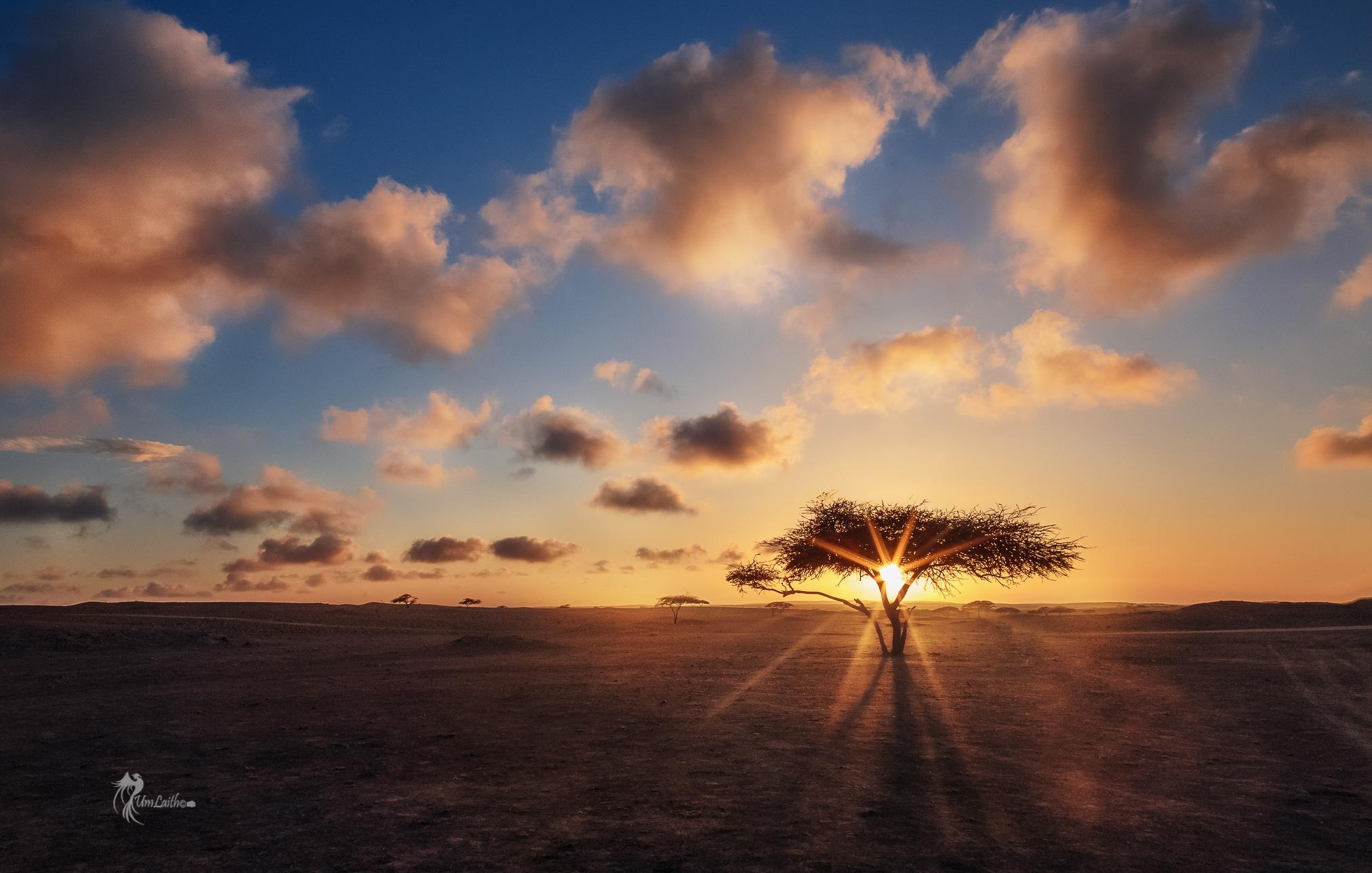 Sun flare between the branches by Fatima Al-Amri