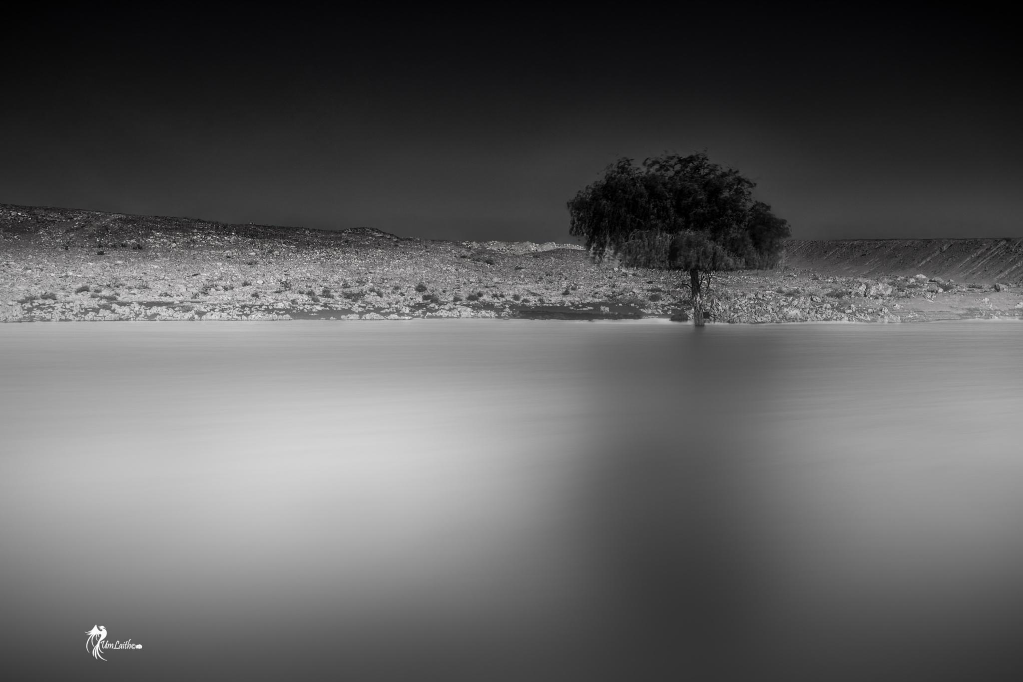 A lonely tree from my dreams! by Fatima Al-Amri