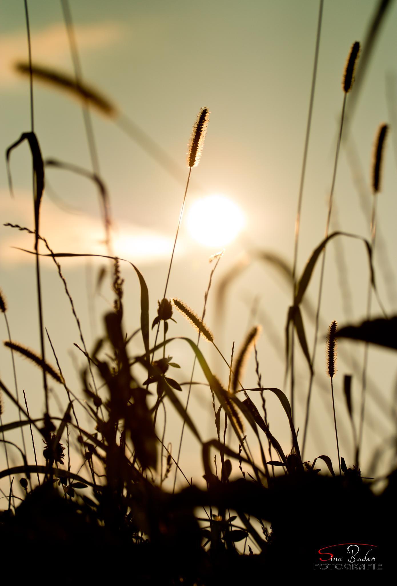 The sun against by SiBa55
