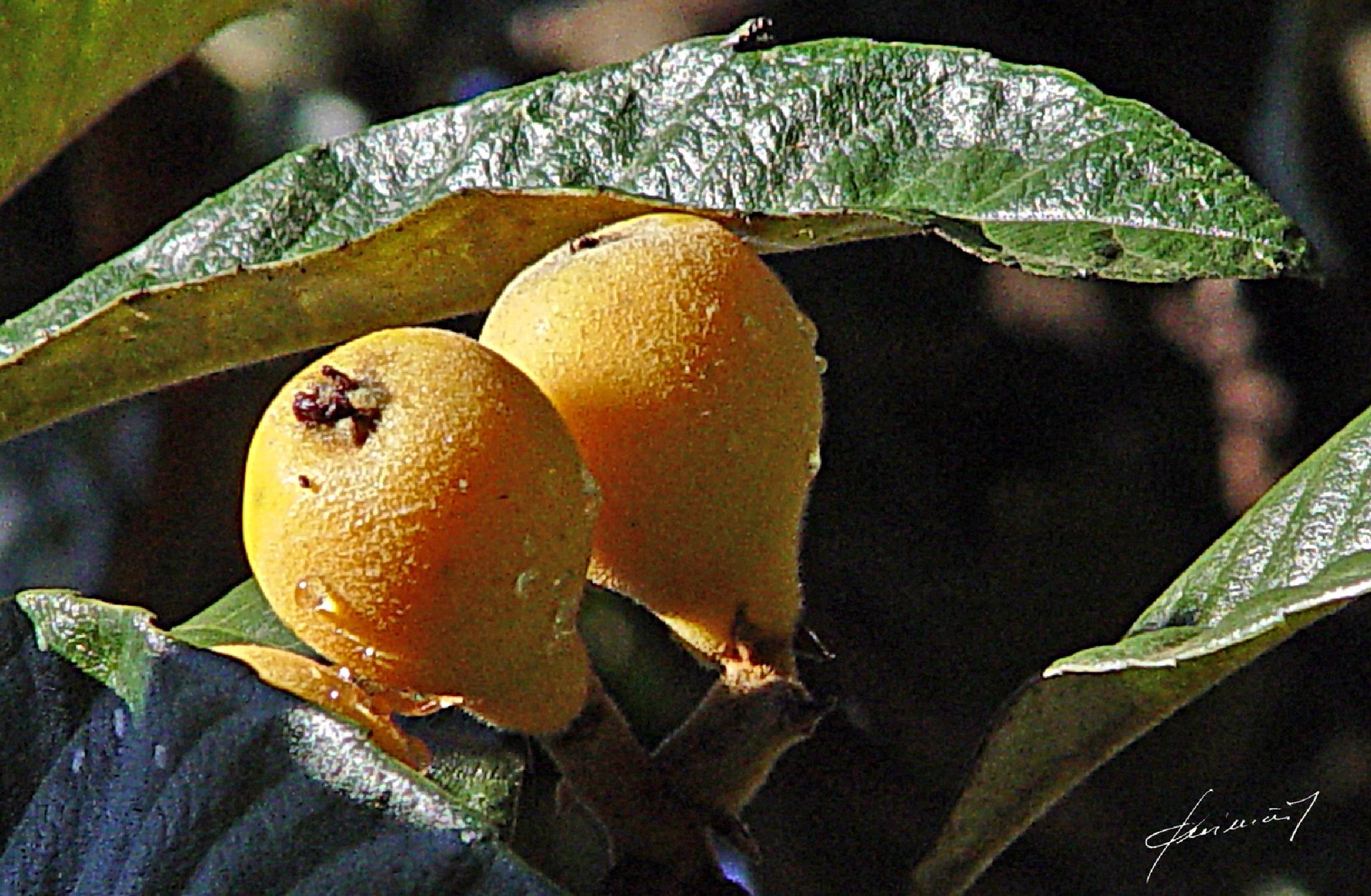 fruta by Ed. Guimarães