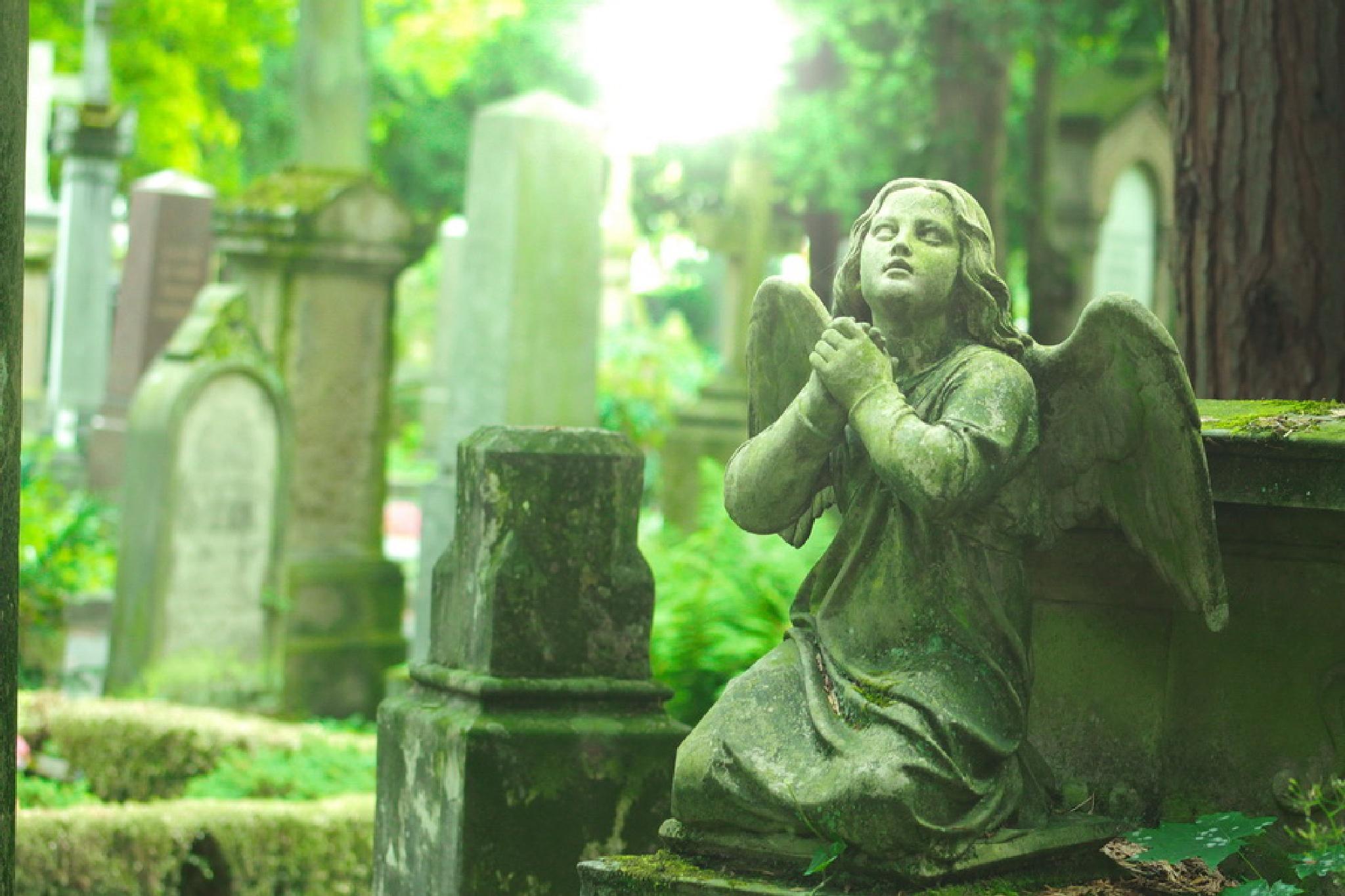 Friedhof Bonn by Freihandfotografie Wuppertal
