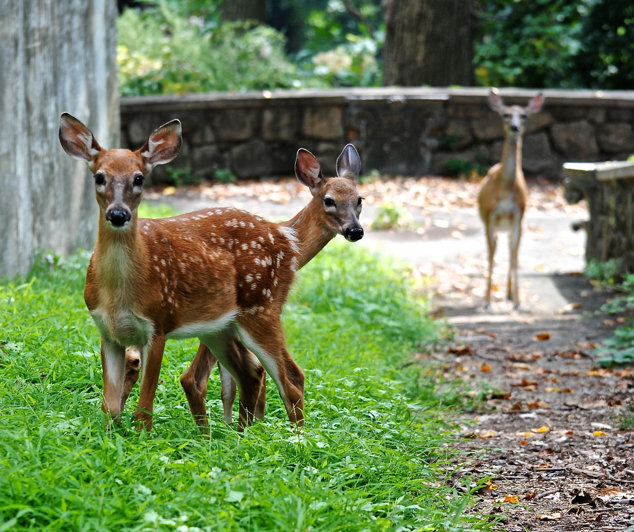 Photo in Animal #deer #babies #preserve