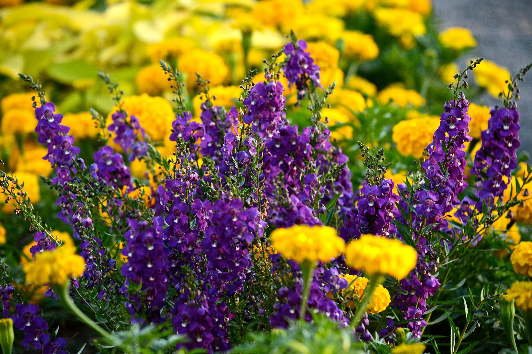 Photo in Random #garden #flowers #spring