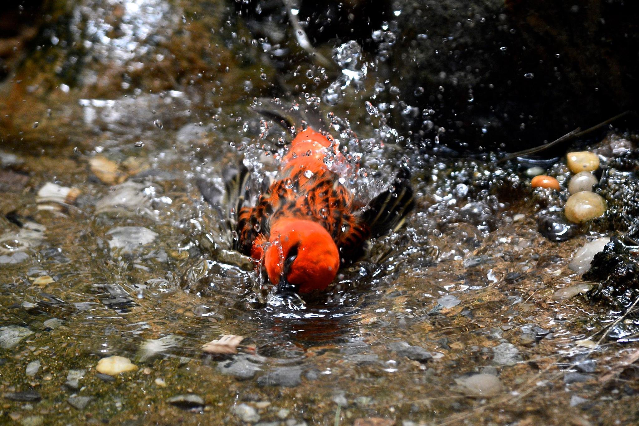 Bird Bath by Kathy Lebron Photography