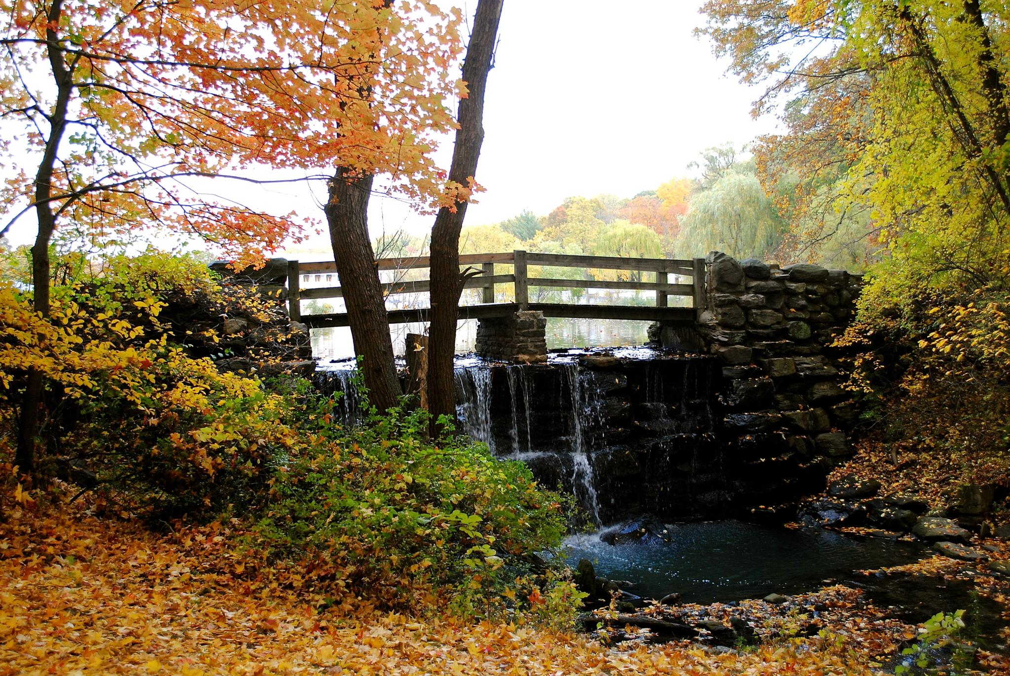 Autumn in the Park by Kathy Lebron Photography