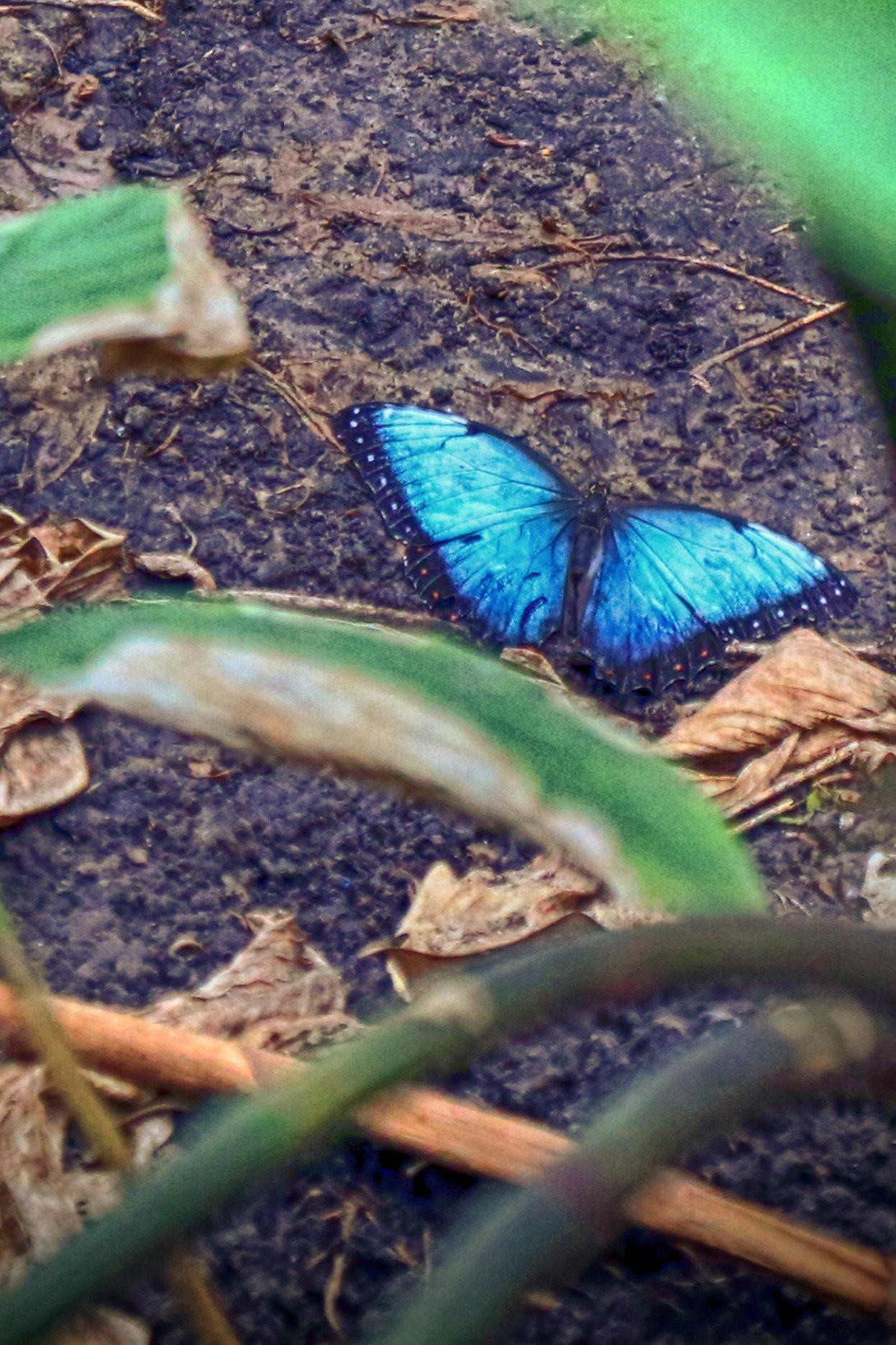 Blue by jblakephotos