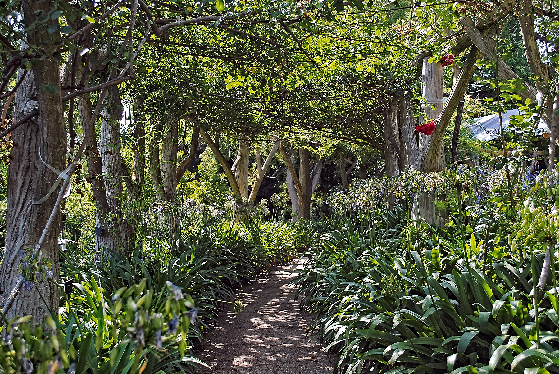 Photo in Rural #arbor #pathway #plants #foliage #park