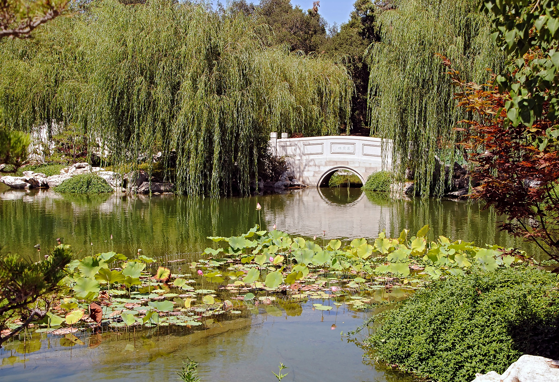 Photo in Landscape #pond #bridge #water #lillypads #trees #weeping willow